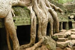 temple arbre cambodge