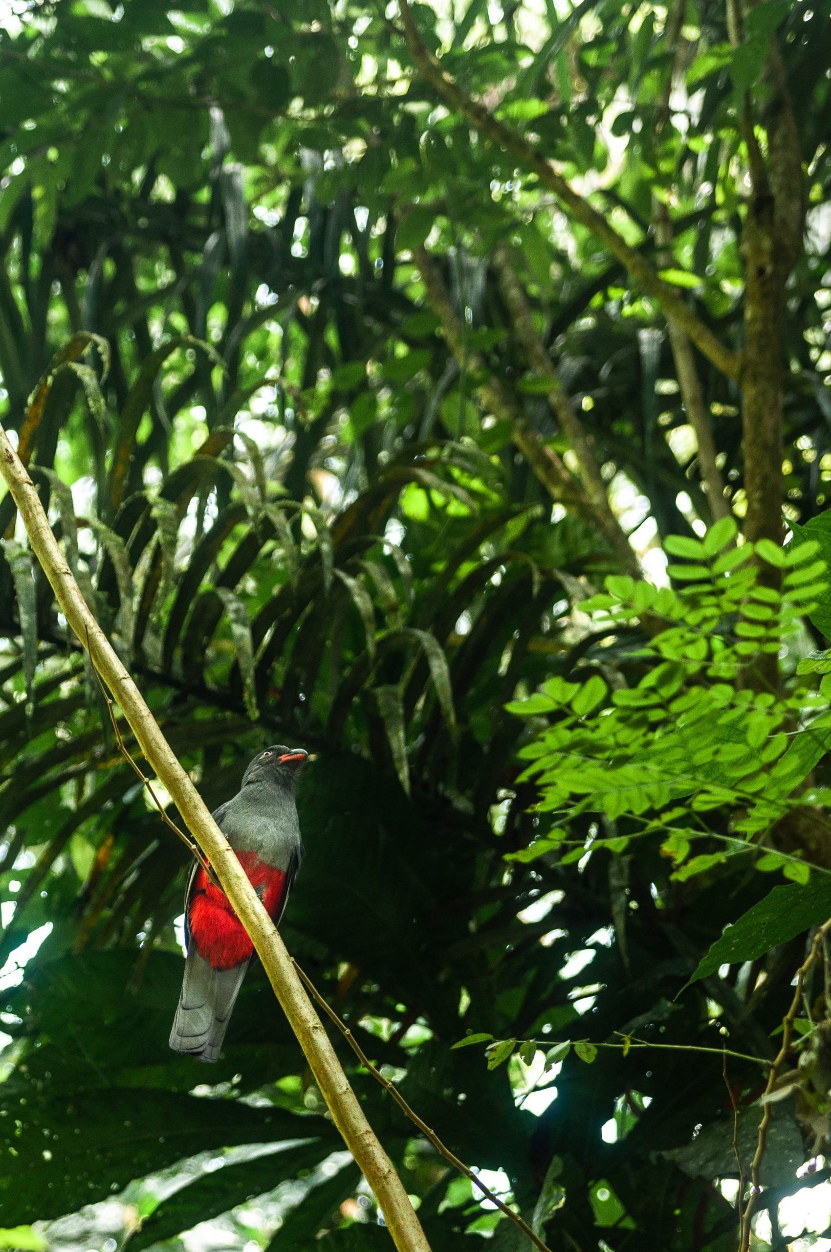 Panama city 19 scaled - Les globe blogueurs - blog voyage nature
