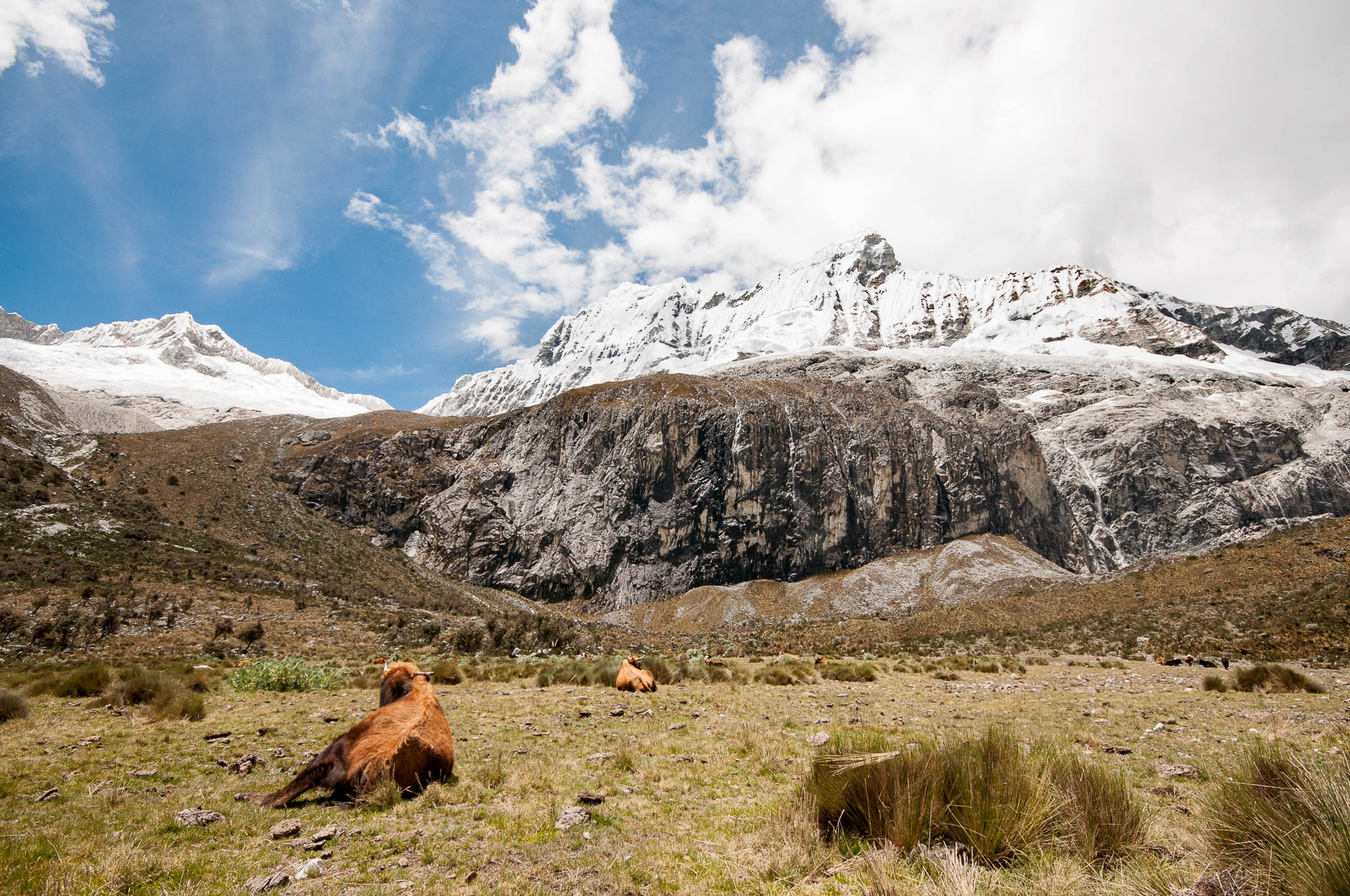 huaraz laguna 69 vaches - Les globe blogueurs - blog voyage nature