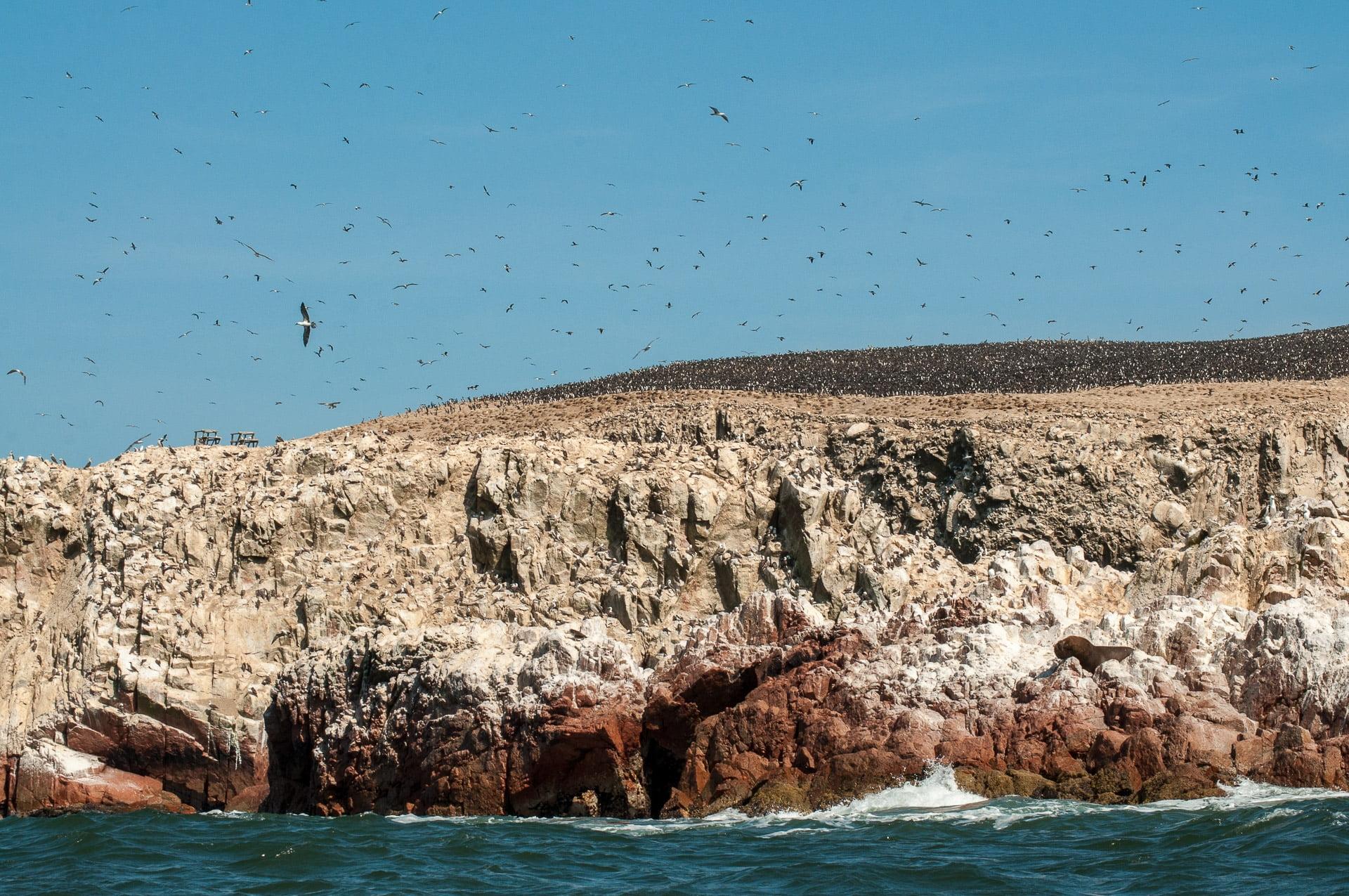 paracas colonie oiseaux rocher - Les globe blogueurs - blog voyage nature
