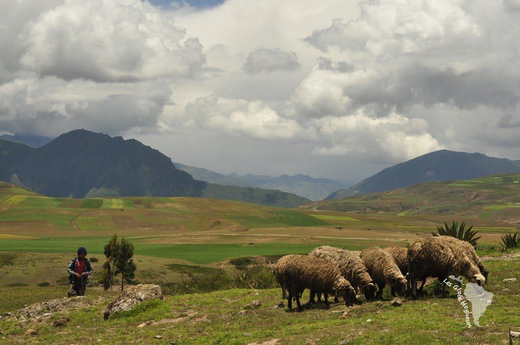 culture, élevage, berger, moray