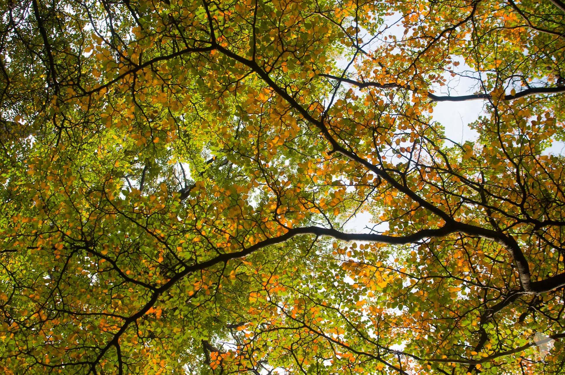 feuilles automne au pied du Fitz Roy près d'El chalten