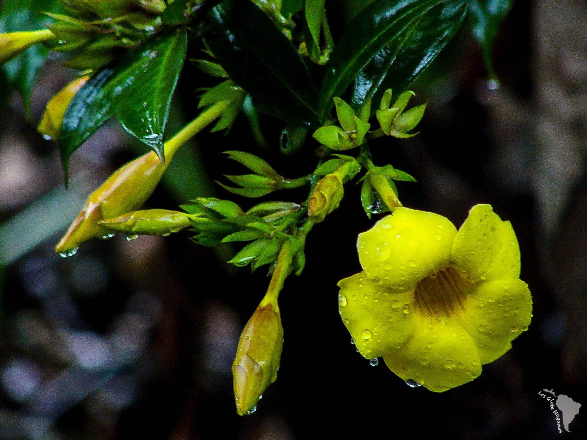 fleur mindo