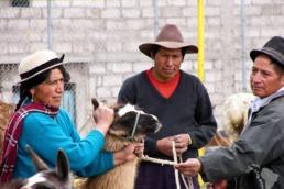 etiquettage lama équateur uai