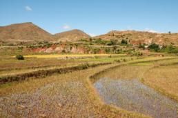 Les rizières en terrasses de Betafo