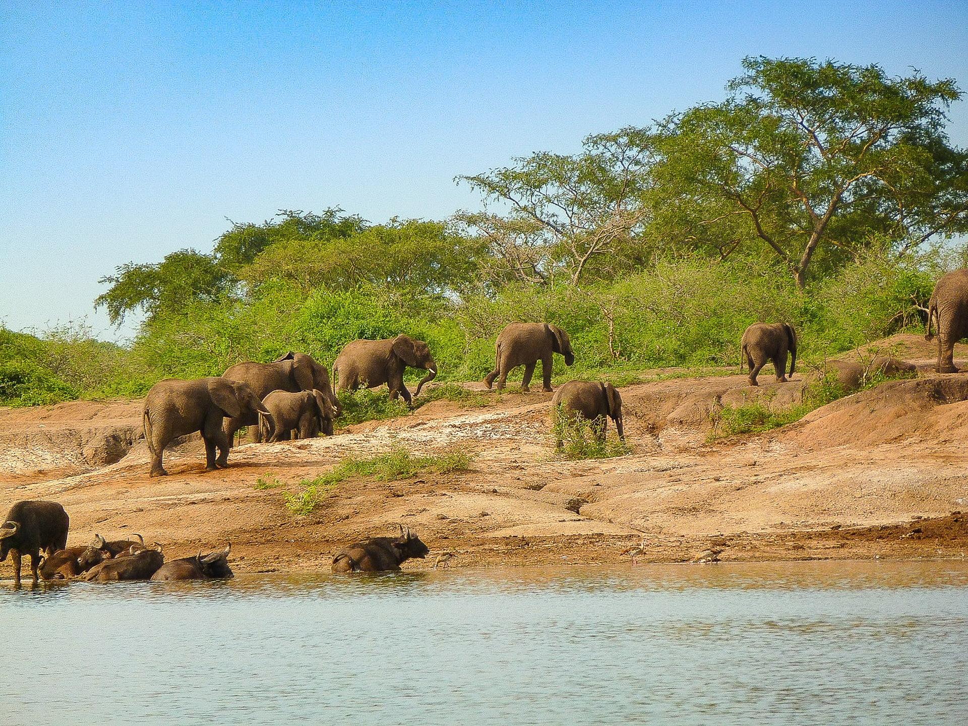 Les plus beaux paysages d'Afrique - parc national queen elizabeth en Ouganda