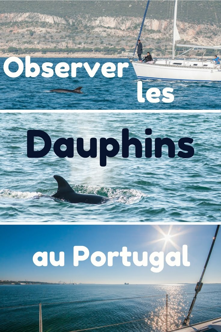 couv dauphins1 - Les globe blogueurs - blog voyage nature