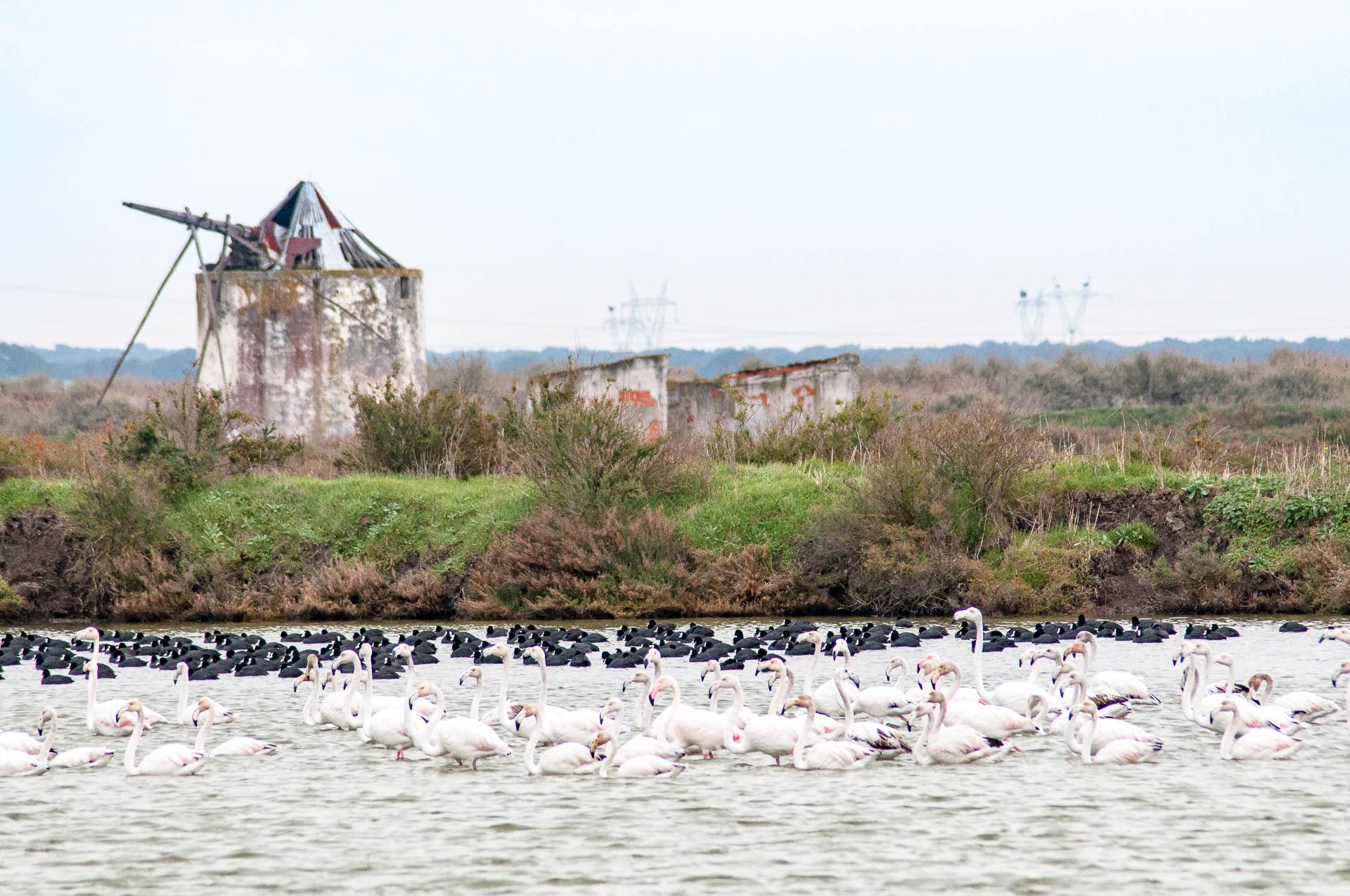 estuaire tage creche flamands bis 2783
