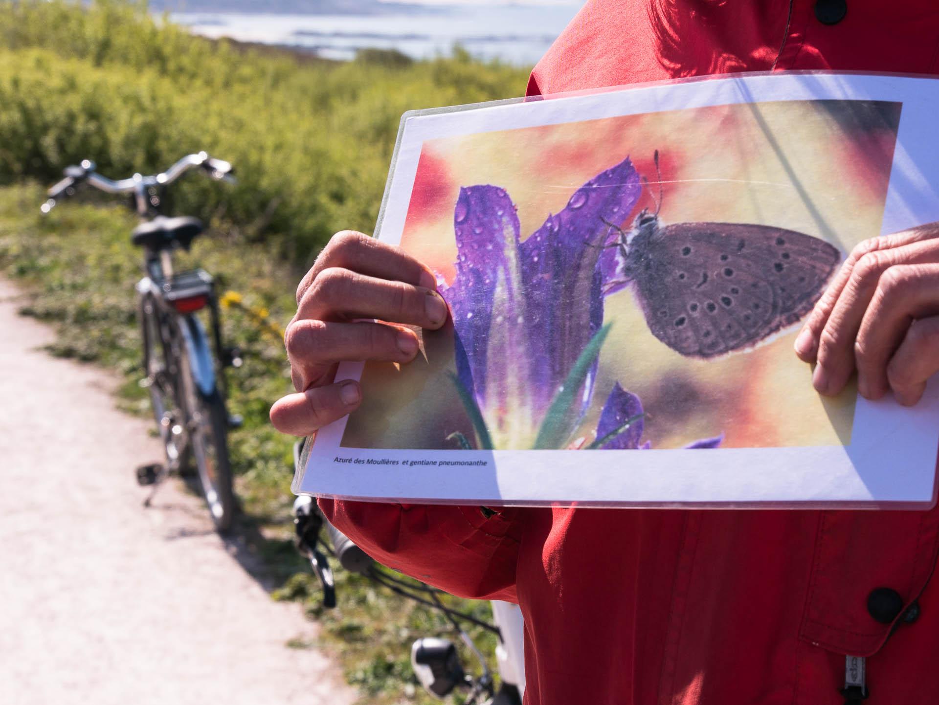 cap fréhel guide - Les globe blogueurs - blog voyage nature