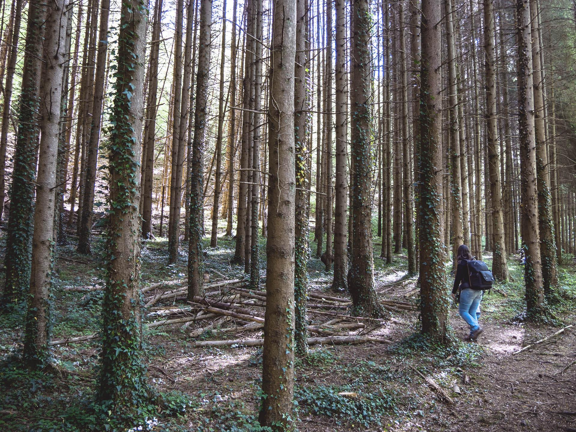 Ninglinspo forêt - Les globe blogueurs - blog voyage nature