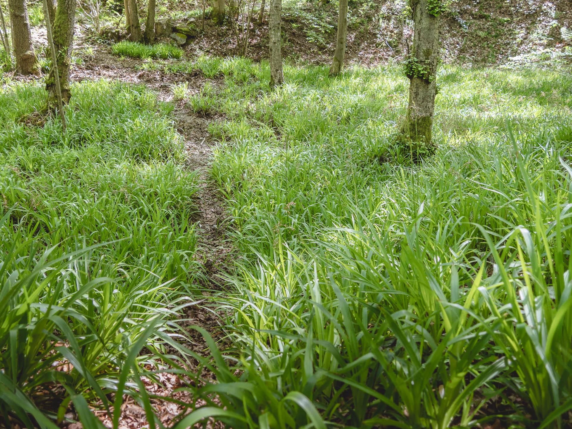 Ninglinspo herbe chemin - Les globe blogueurs - blog voyage nature