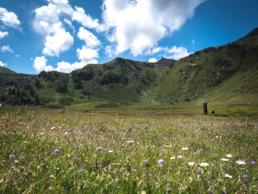 plaine fleurie vallon de réchy suisse