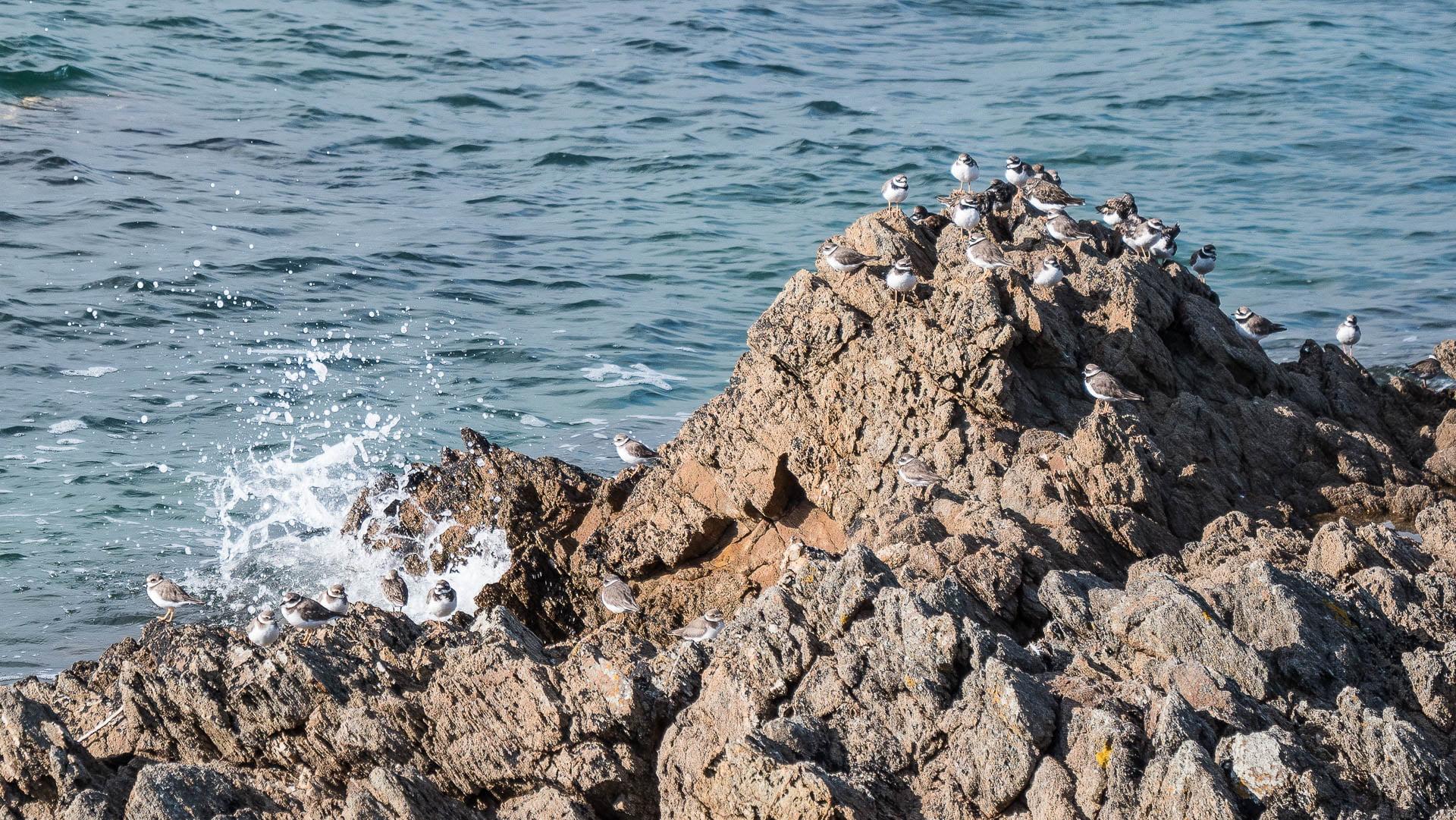 visite de piriac sur mer