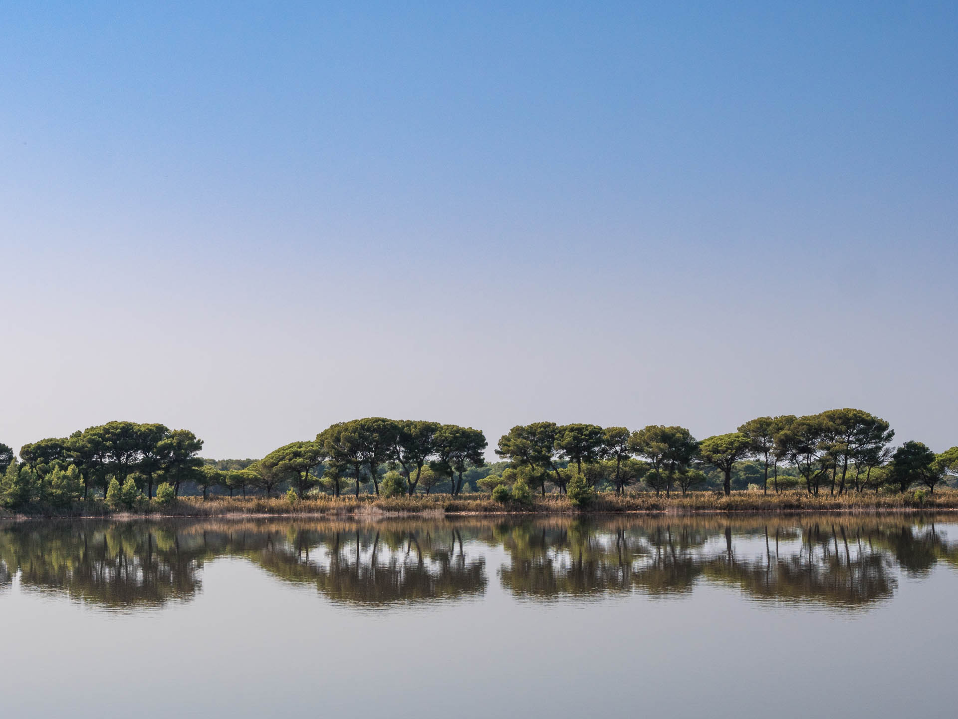 camargue arbres reflet