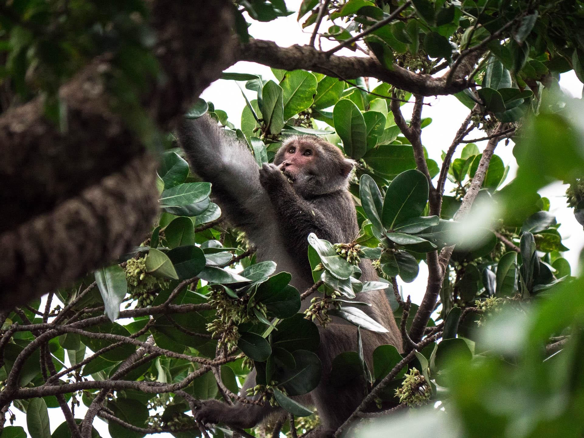 parc forestier kending macaque - Les globe blogueurs - blog voyage nature