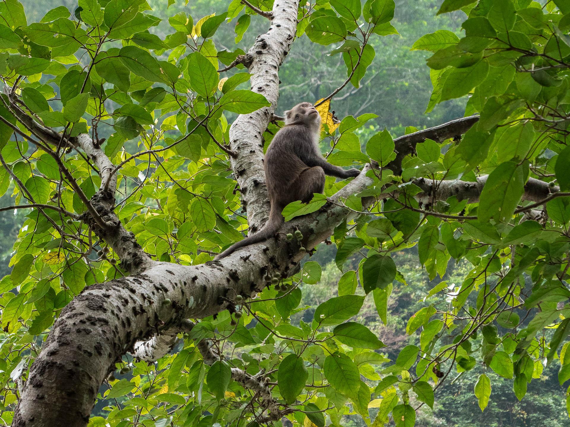 taroko singe - Les globe blogueurs - blog voyage nature