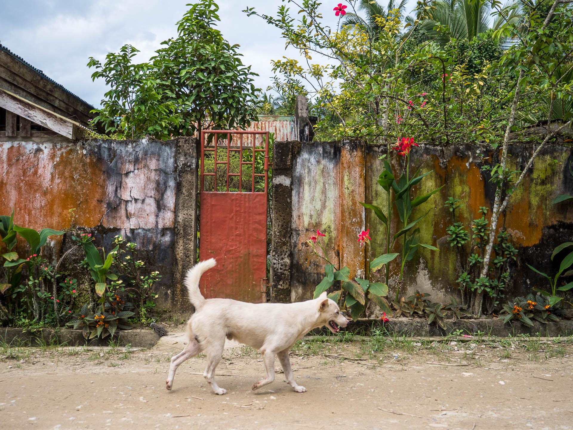 Port barton chien porte - Les globe blogueurs - blog voyage nature