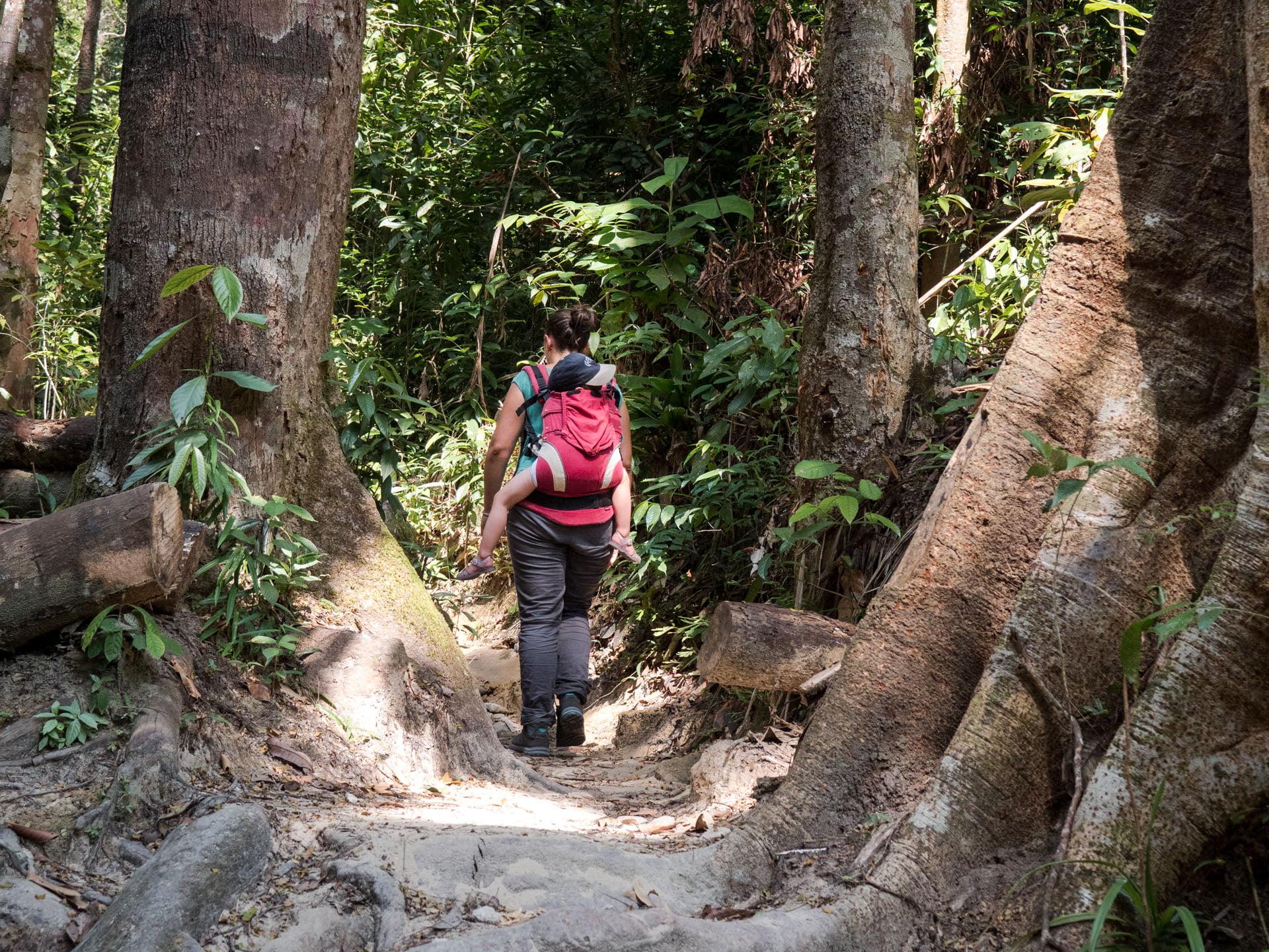 Penang forêt - Les globe blogueurs - blog voyage nature