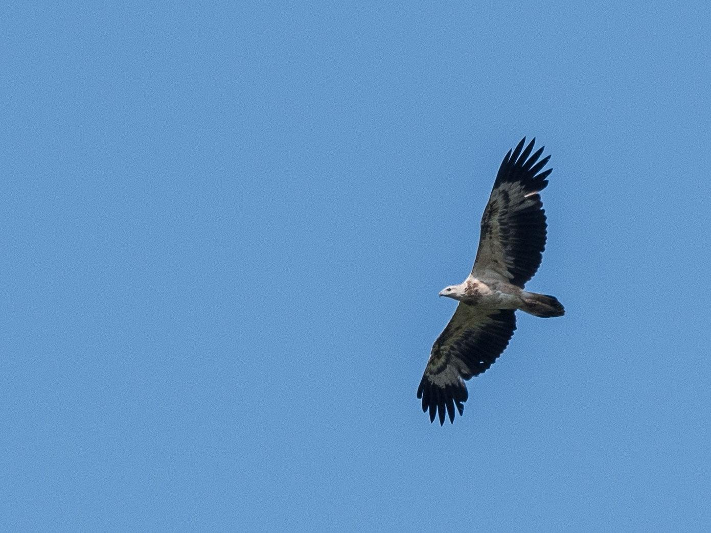 Penang parc naturel aigle - Les globe blogueurs - blog voyage nature