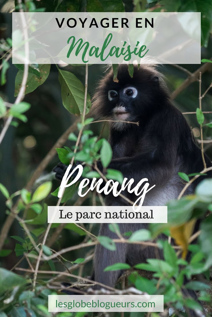 penang - Les globe blogueurs - blog voyage nature