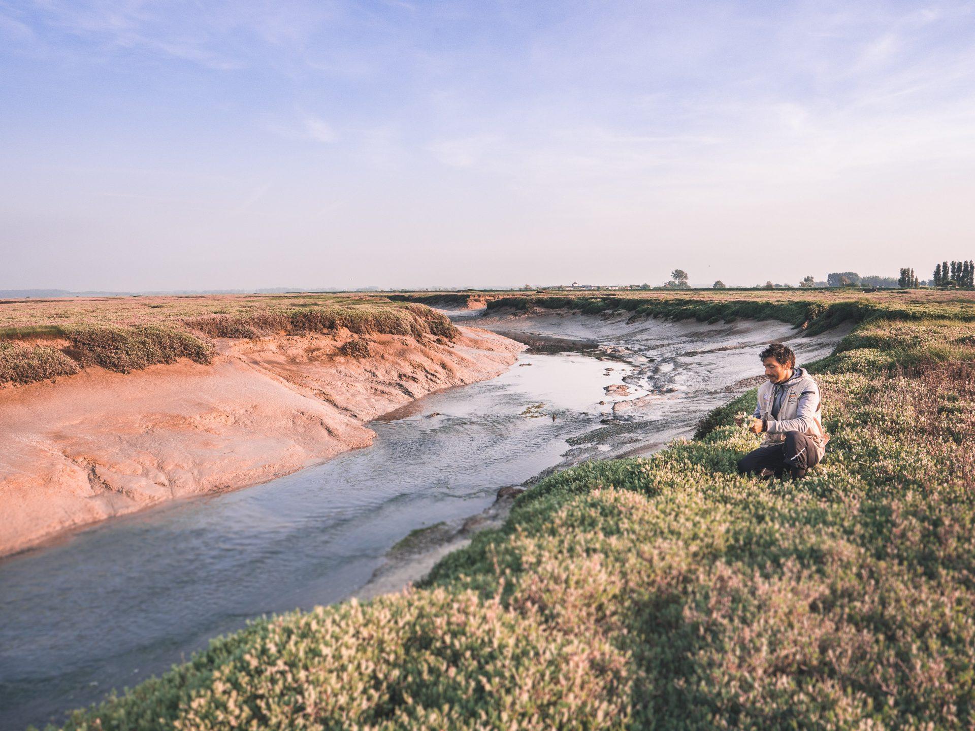 Paysage de la baie de Somme - les prés salés et leur chips de mer