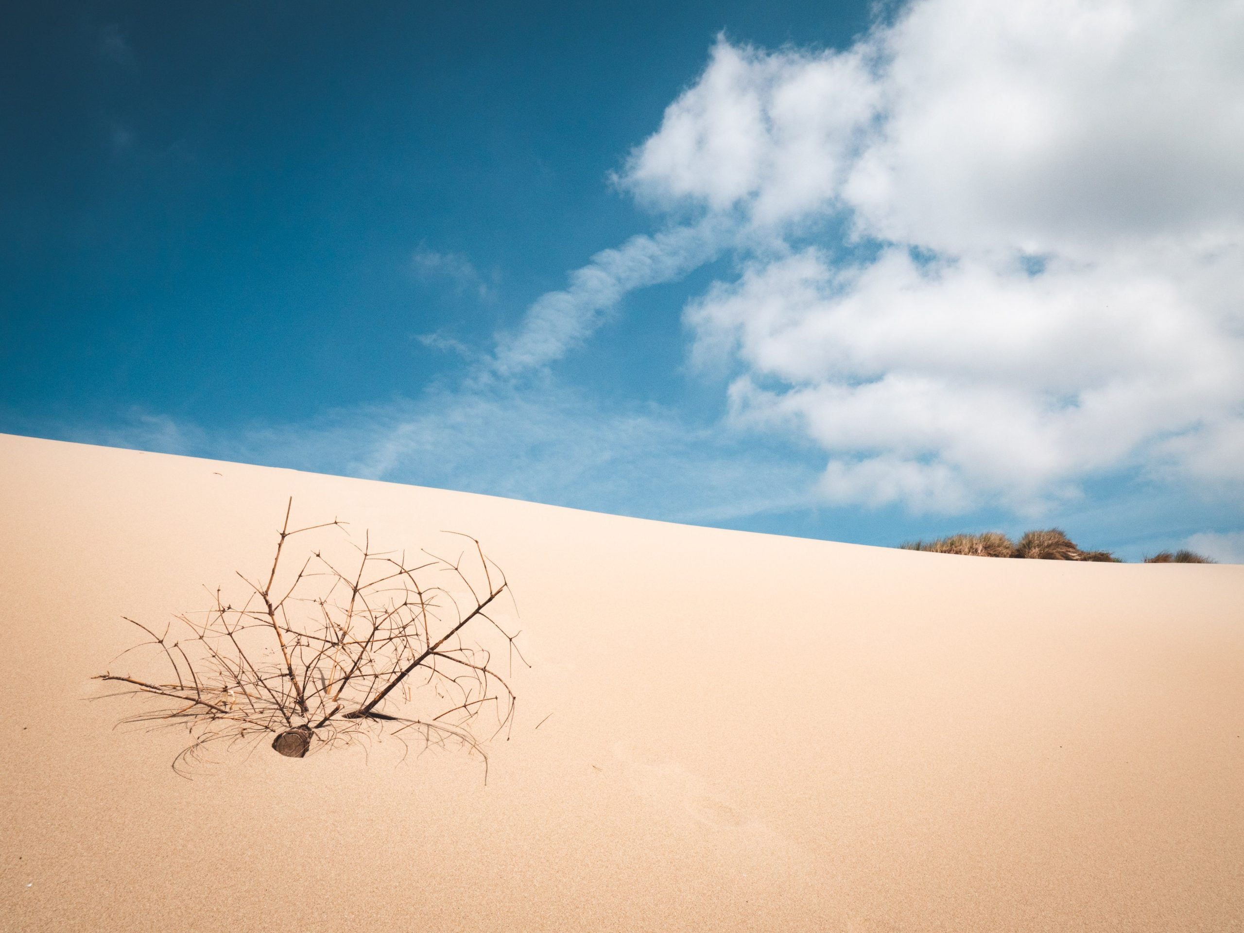 somme dune branche scaled - Les globe blogueurs - blog voyage nature