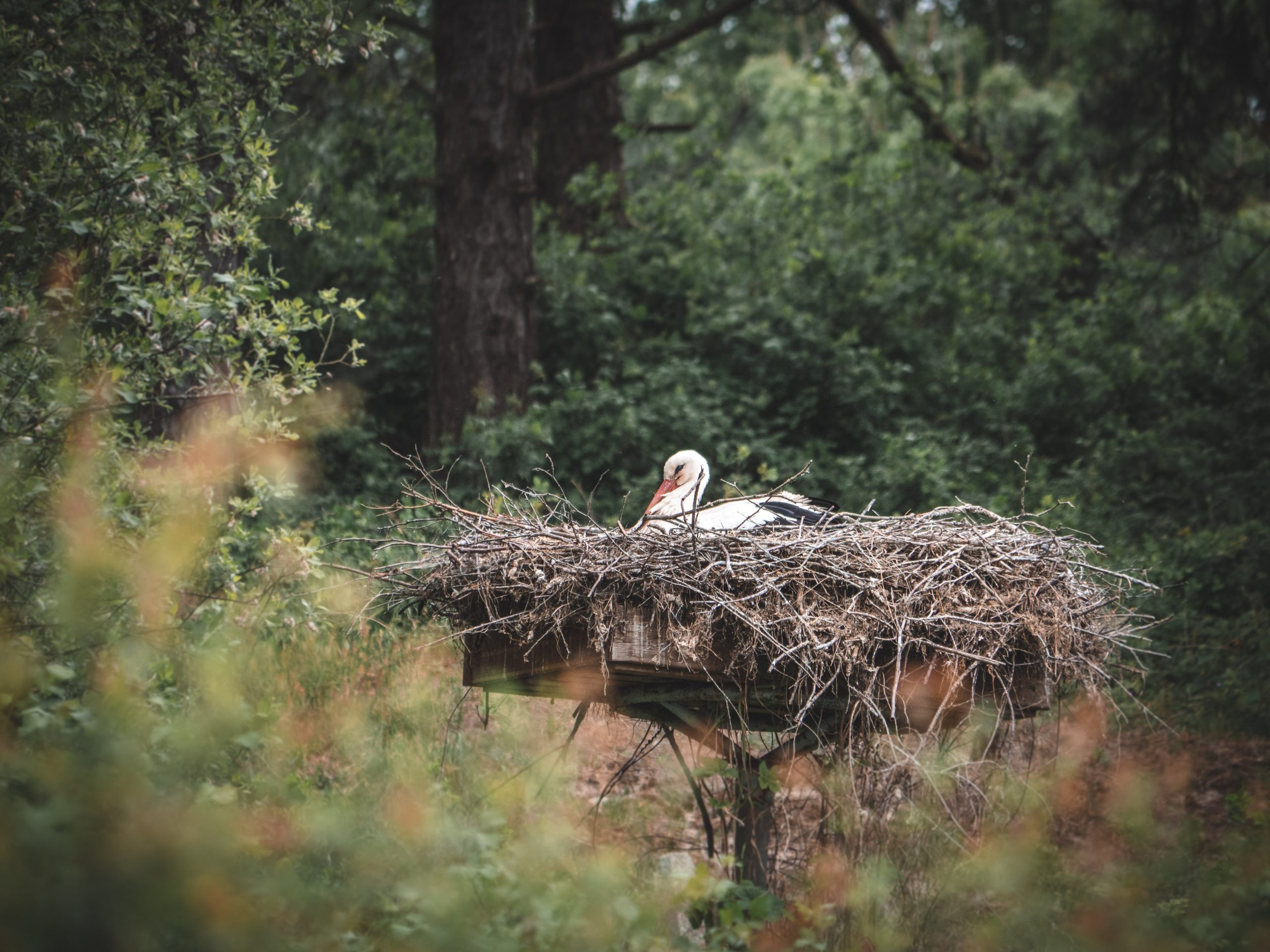 somme marquenterre cigogne scaled - Les globe blogueurs - blog voyage nature