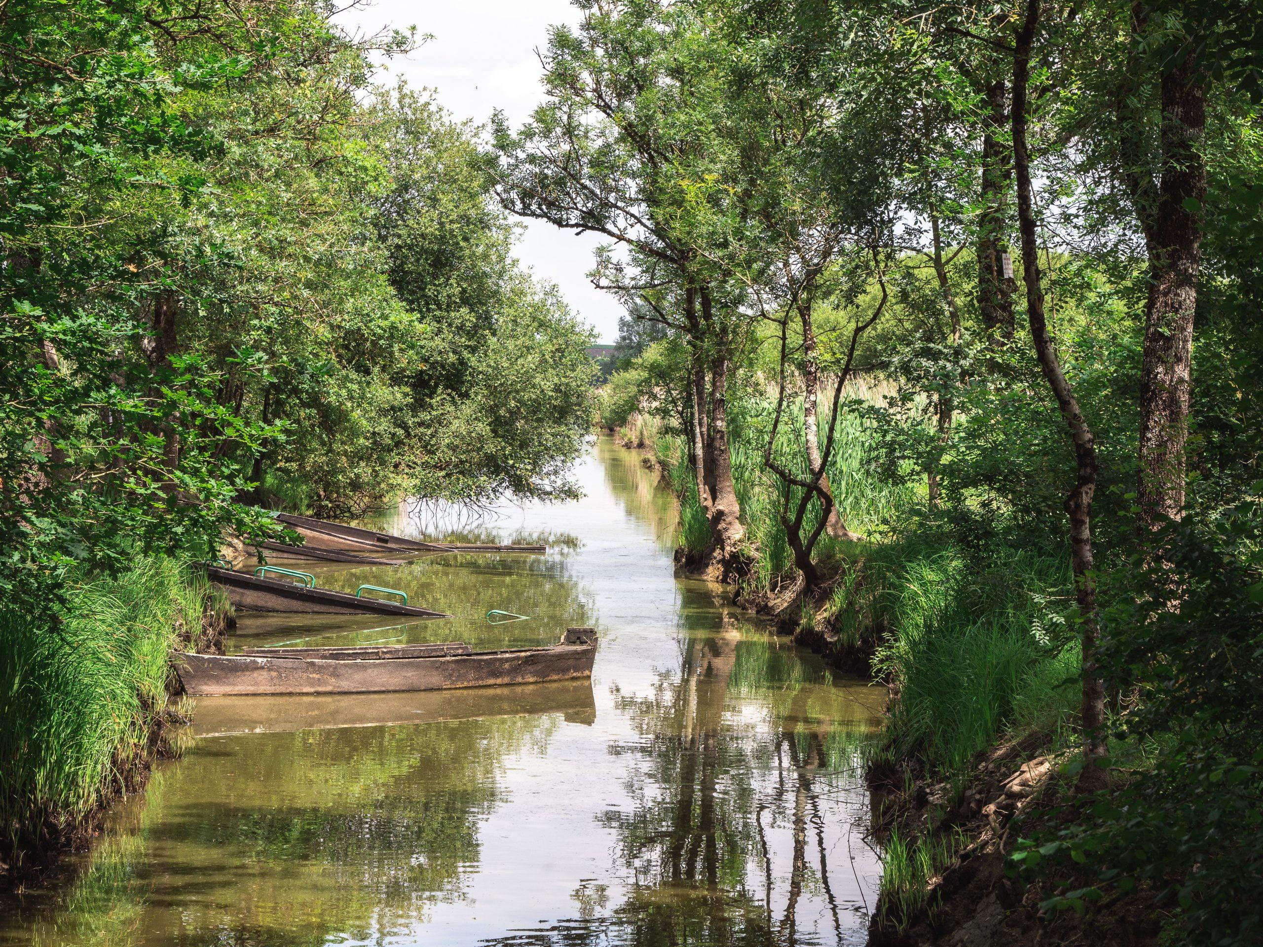 Vignoble vélo paysage marais scaled - Les globe blogueurs - blog voyage nature