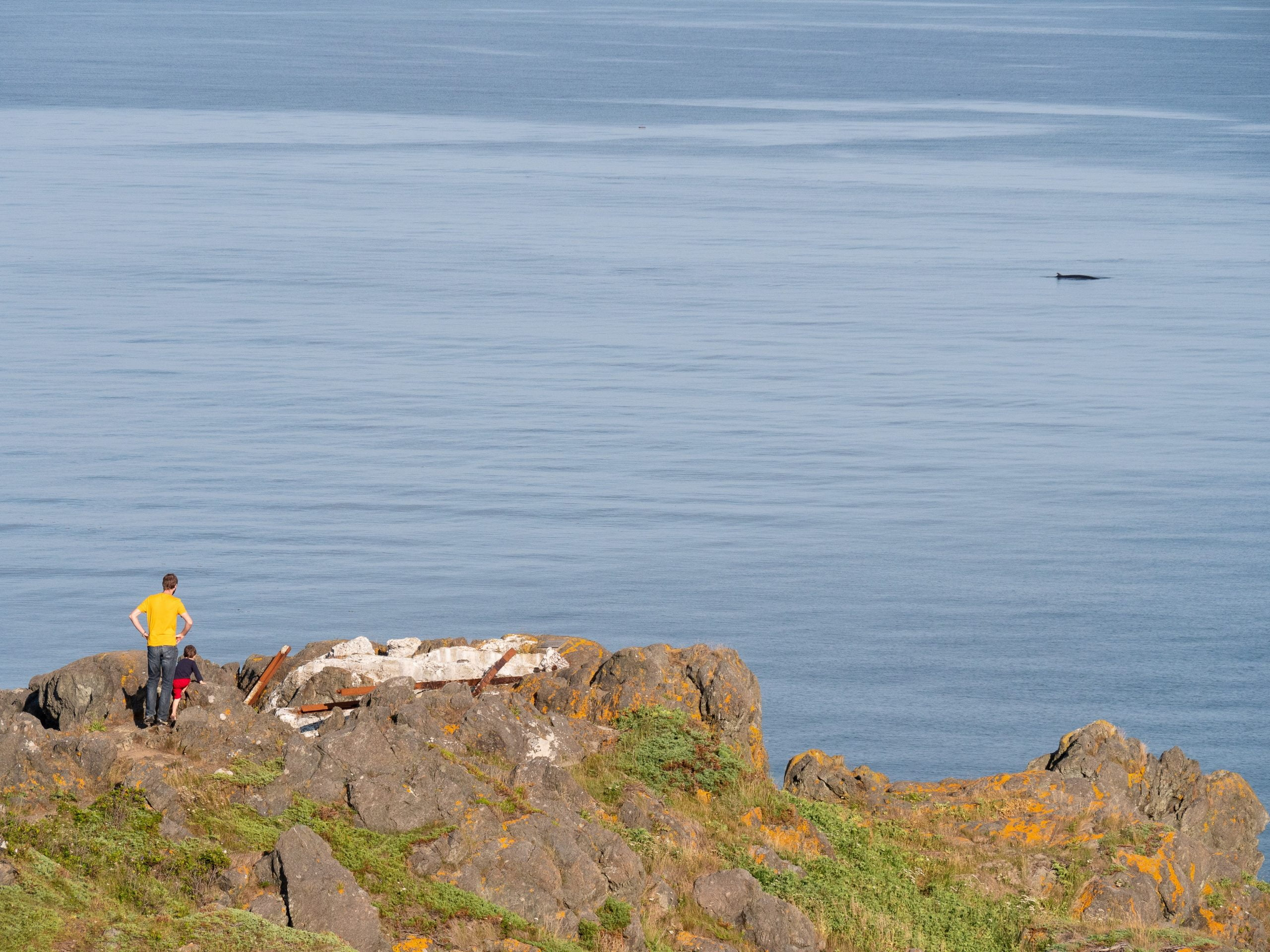 grand manan phare swalowtail -baleine
