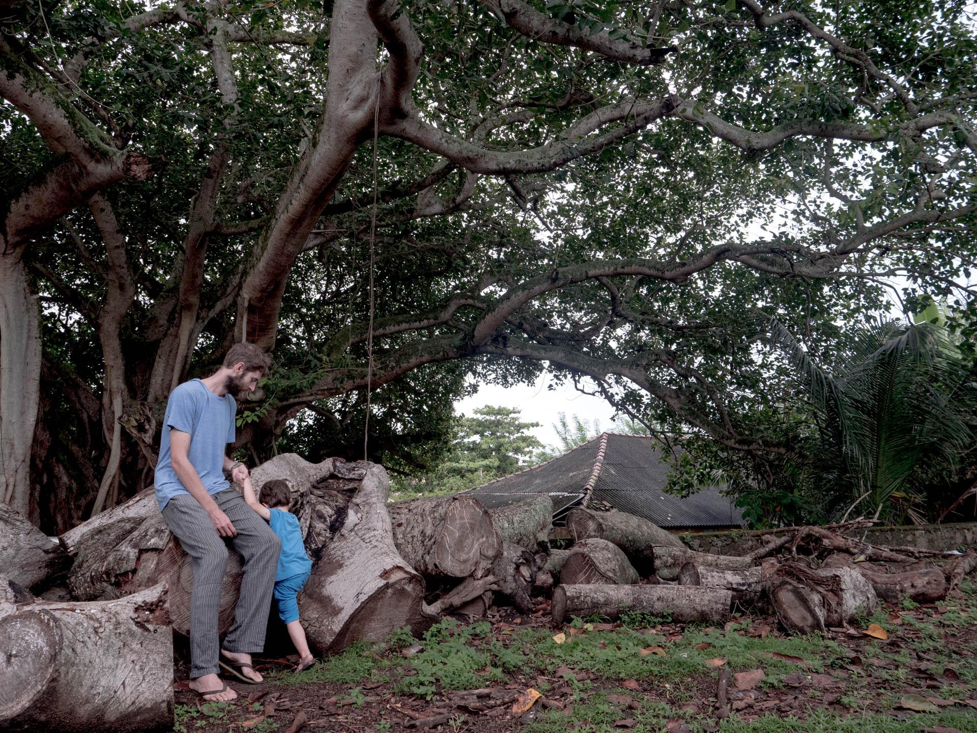 Galle 1 arbre - Les globe blogueurs - blog voyage nature