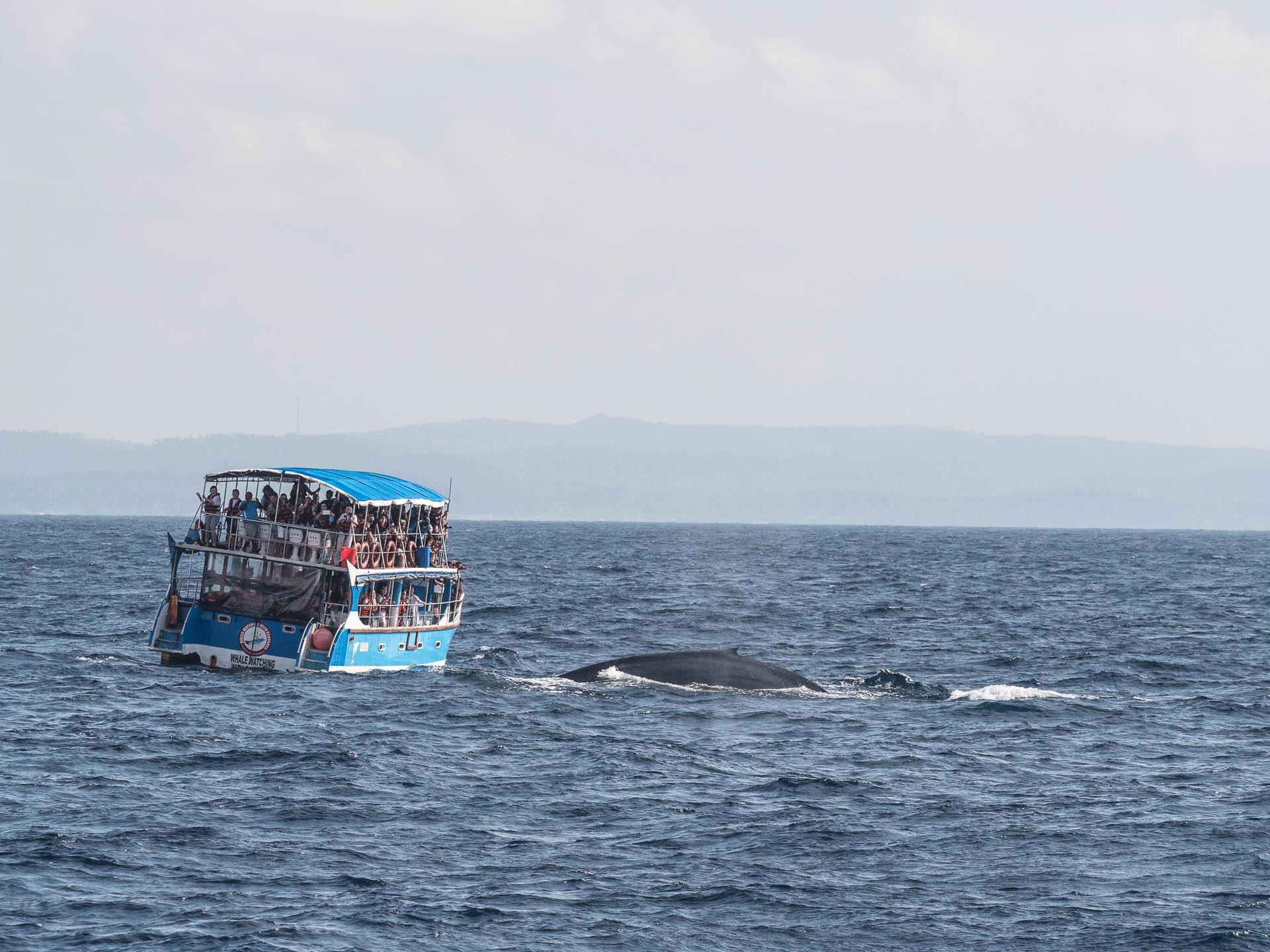 baleine mirissa