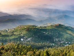 plantation de thé haputale