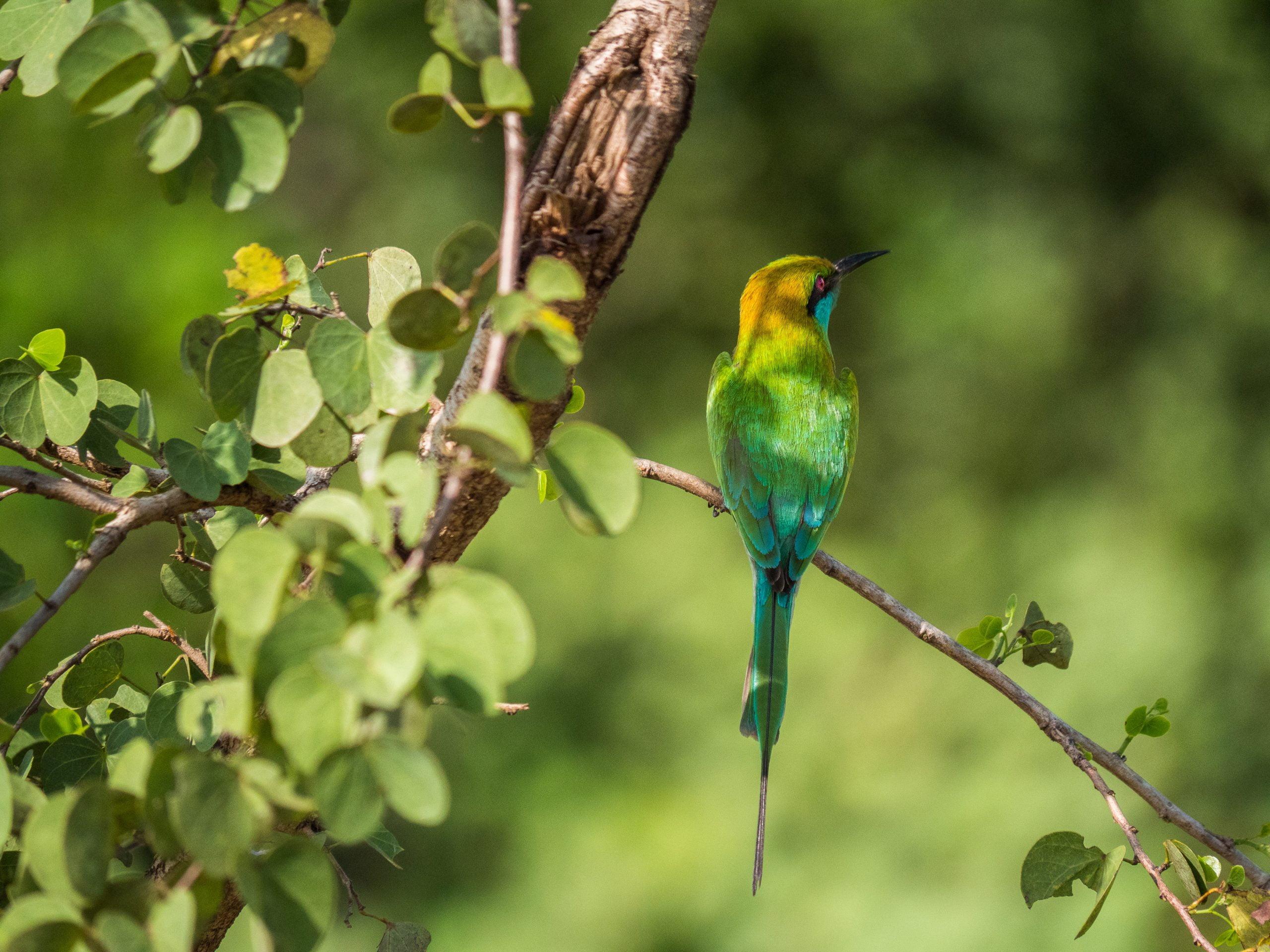oiseaux rivière walawe 7 scaled