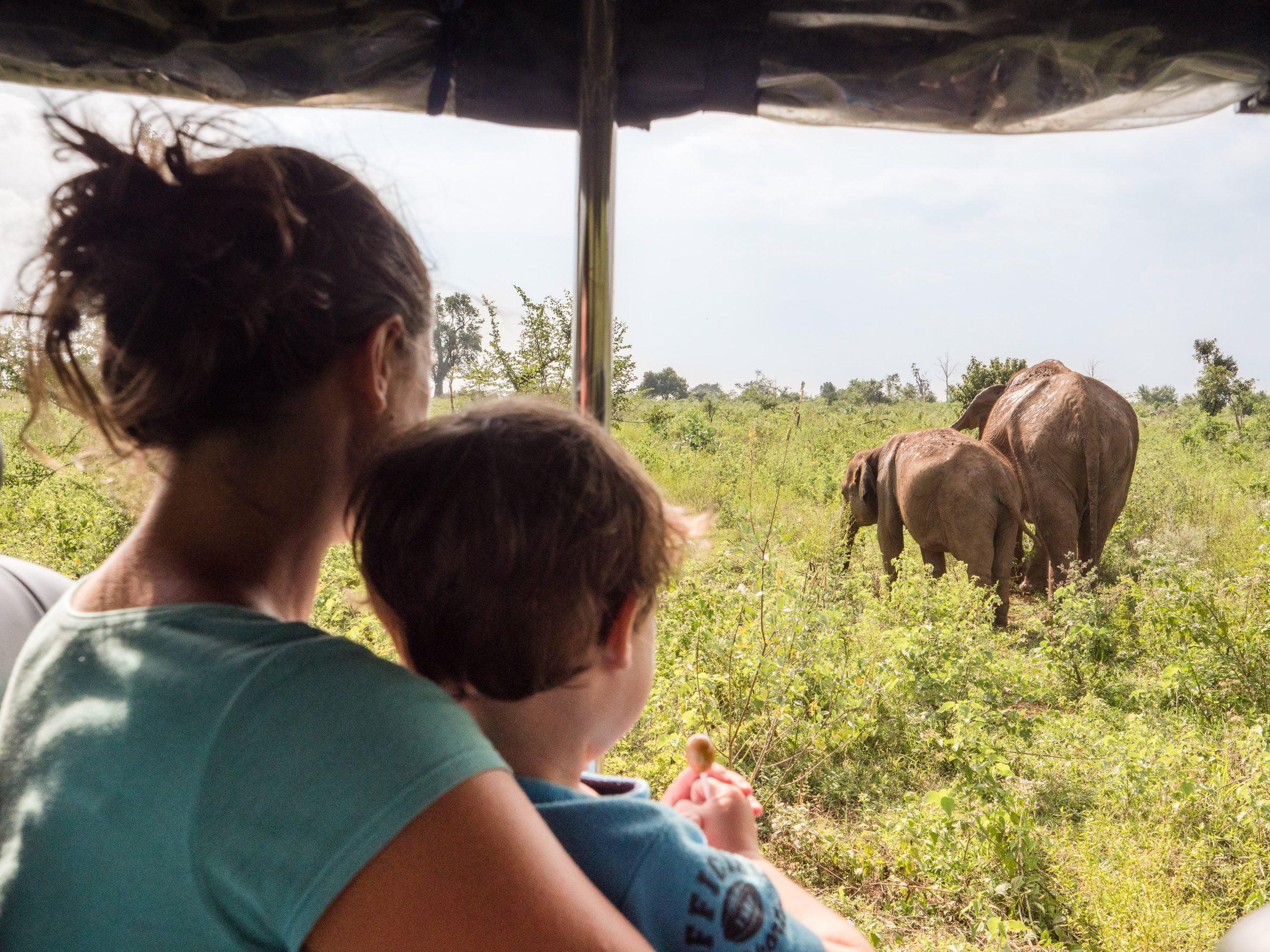 Eléphants Udawalawe