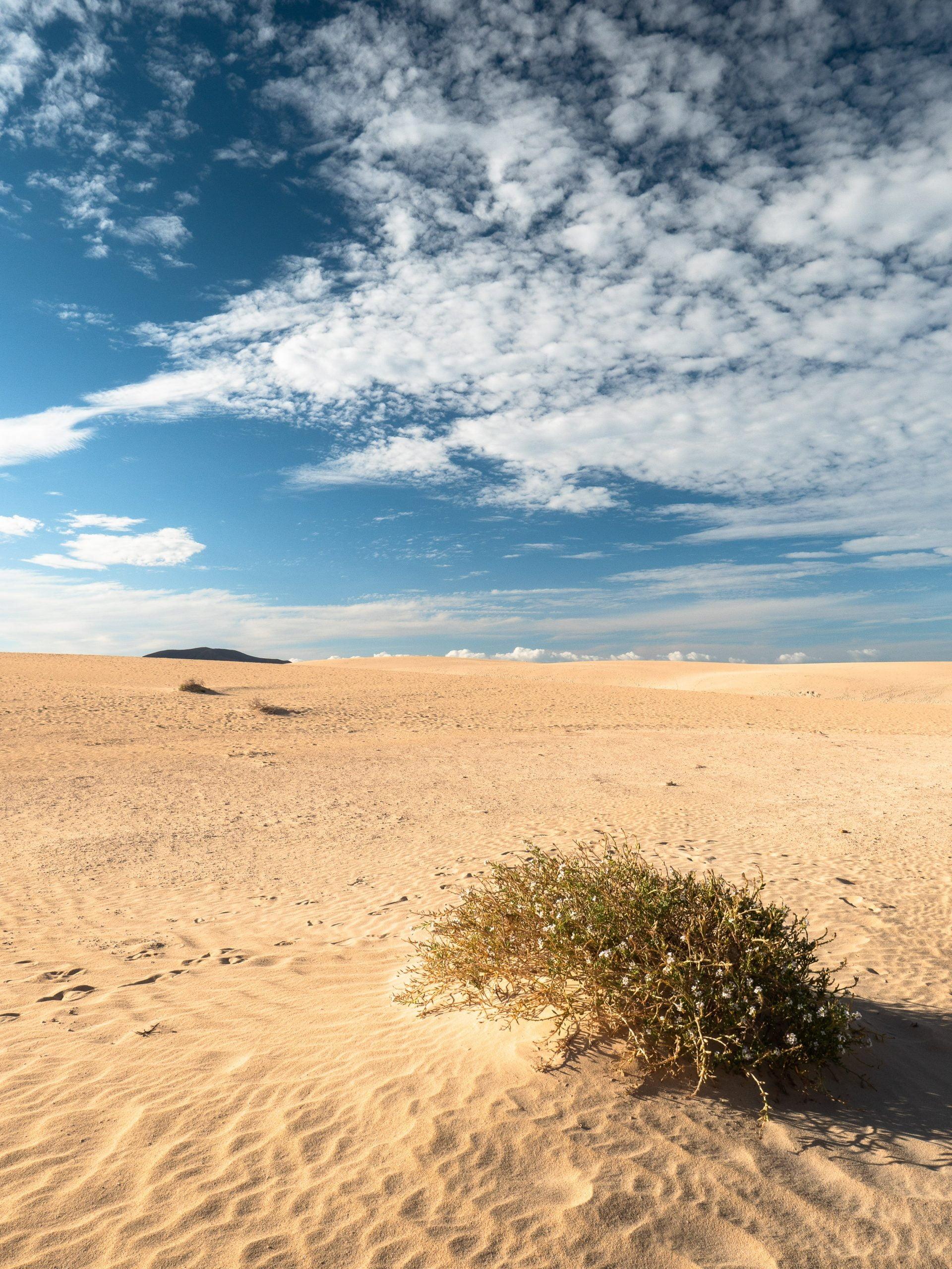 Parc naturel des dunes de Corralejo à Fuerteventura