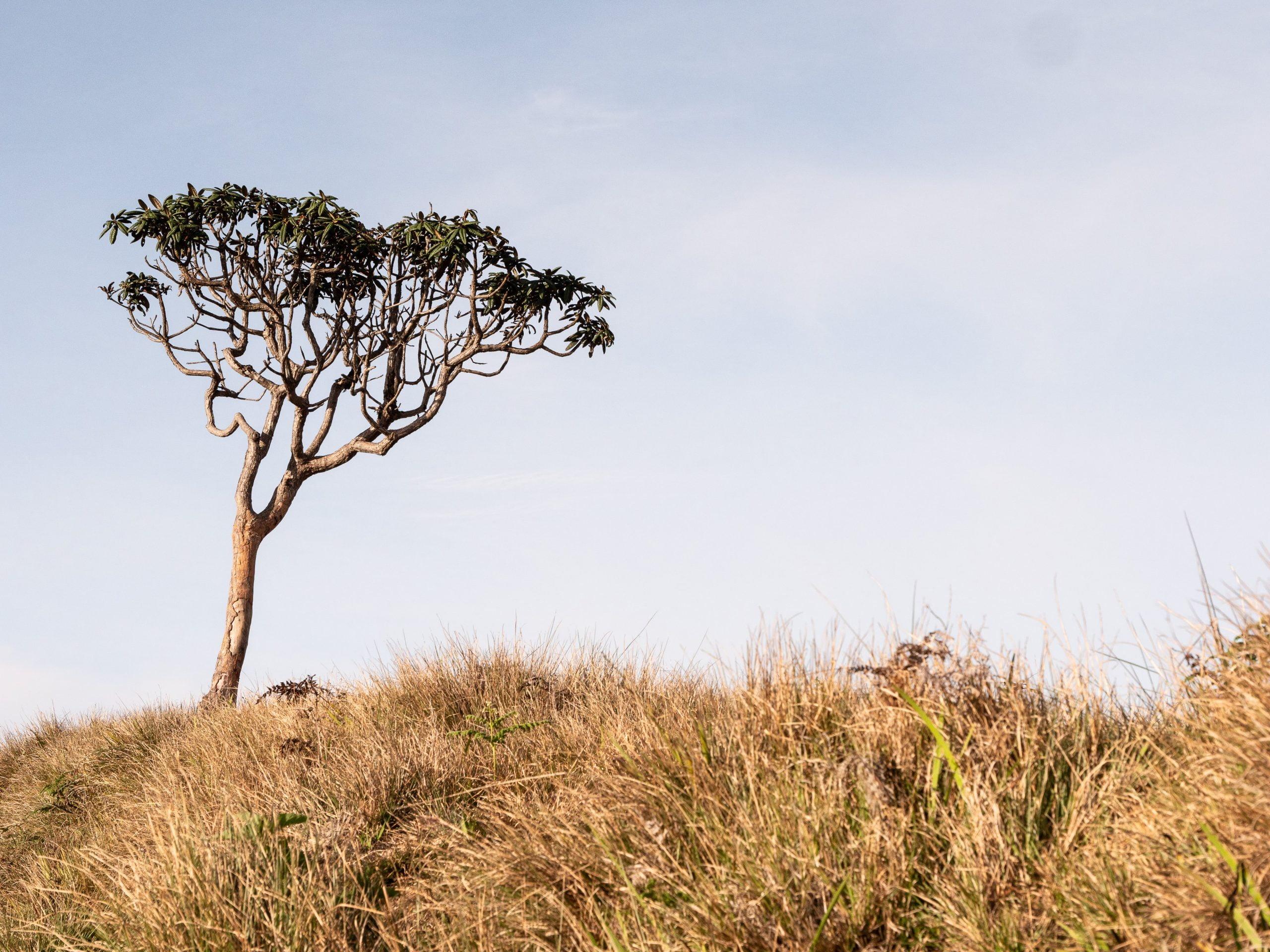 Randonnée au parc d'Horton plains au Sri Lanka