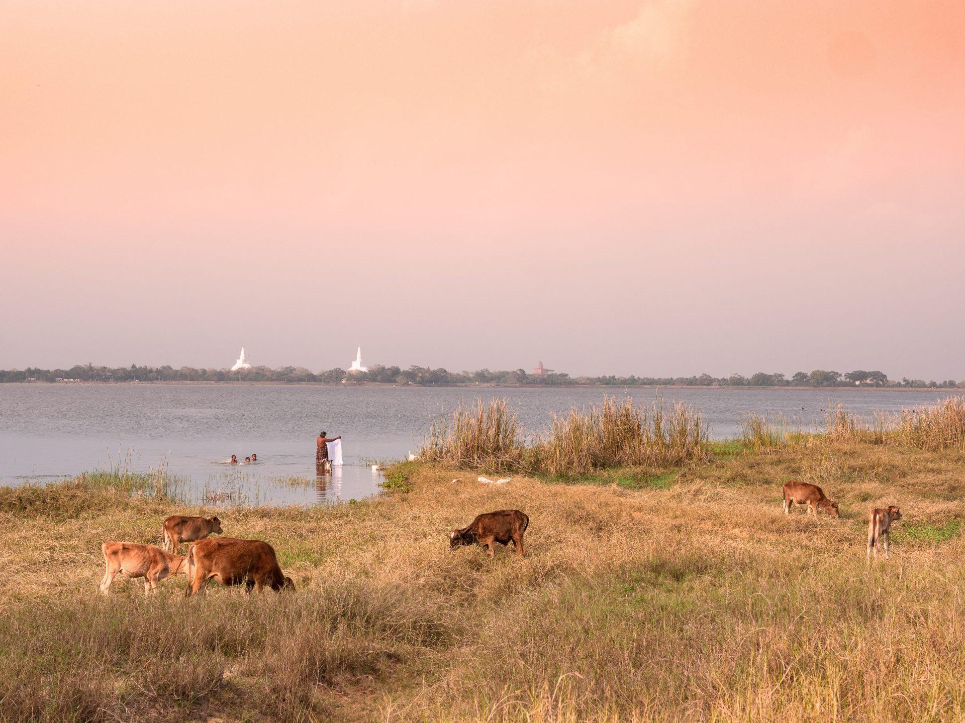 anuradhapura 1299441 - Les globe blogueurs - blog voyage nature