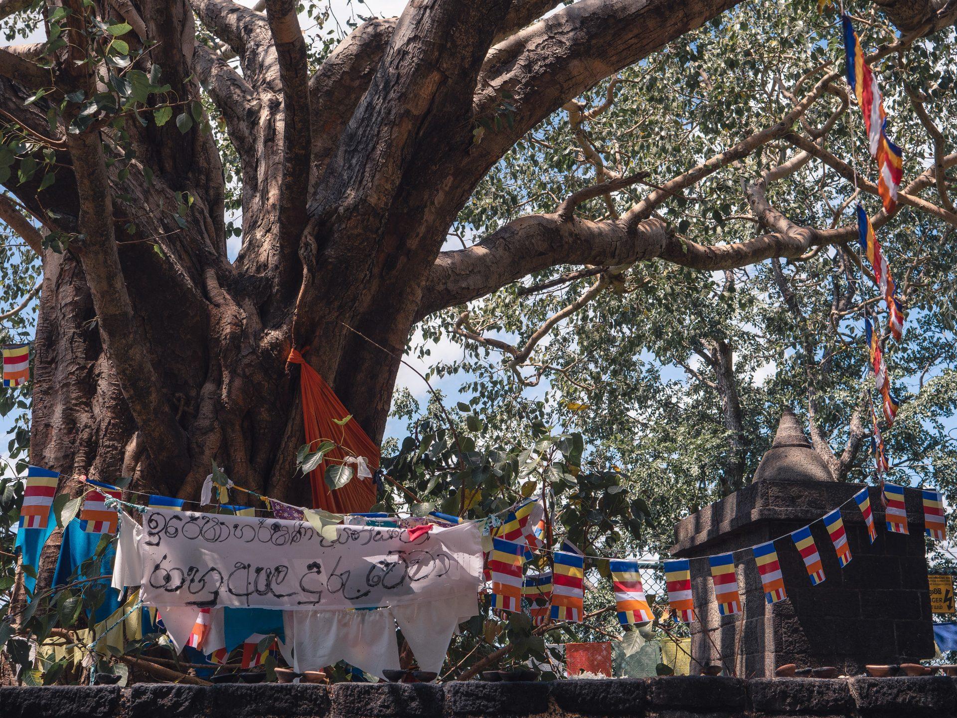 Temple d'or de dambulla au Sri Lanka - arbre