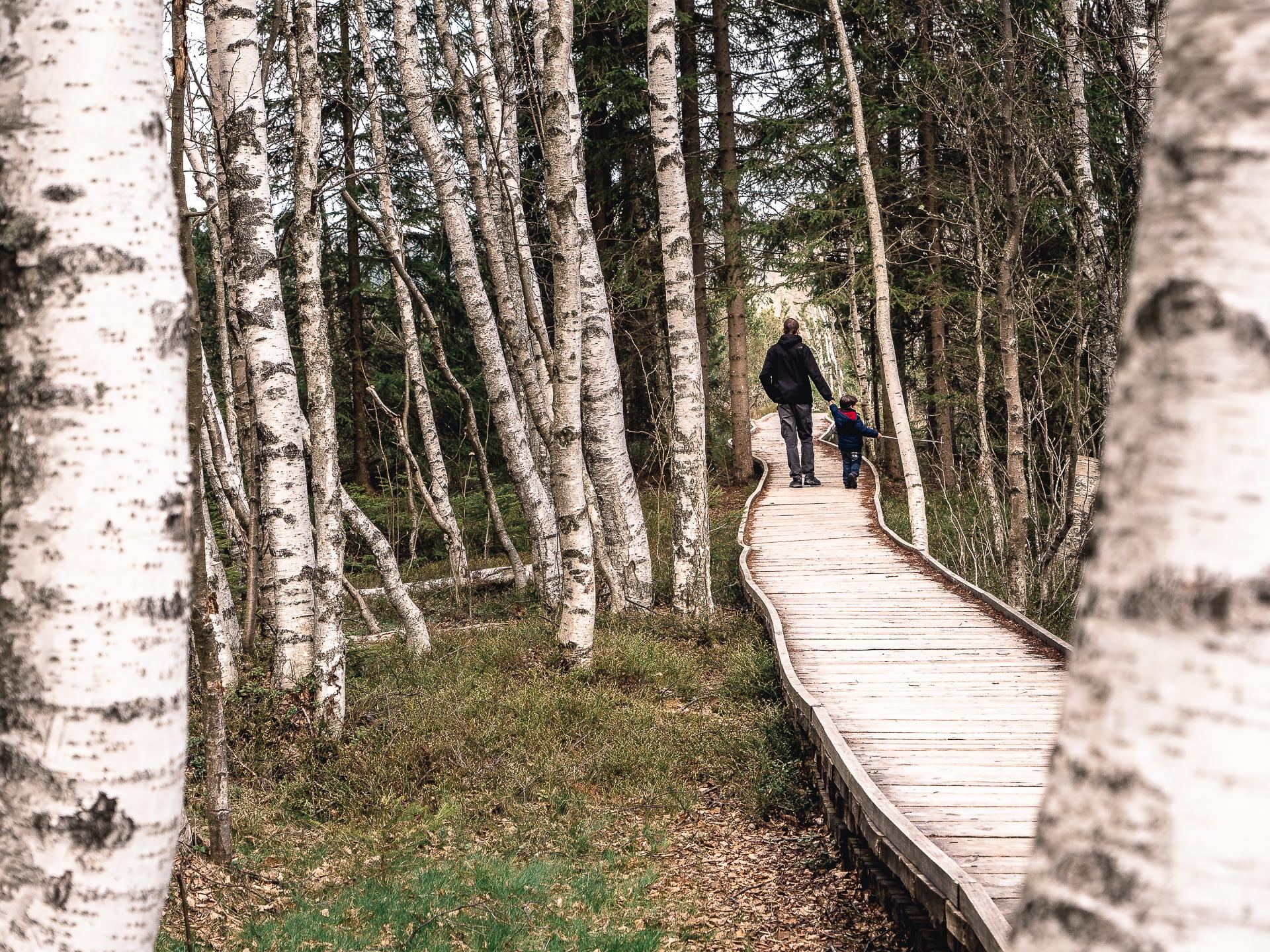 Sumava 52914 - Les globe blogueurs - blog voyage nature