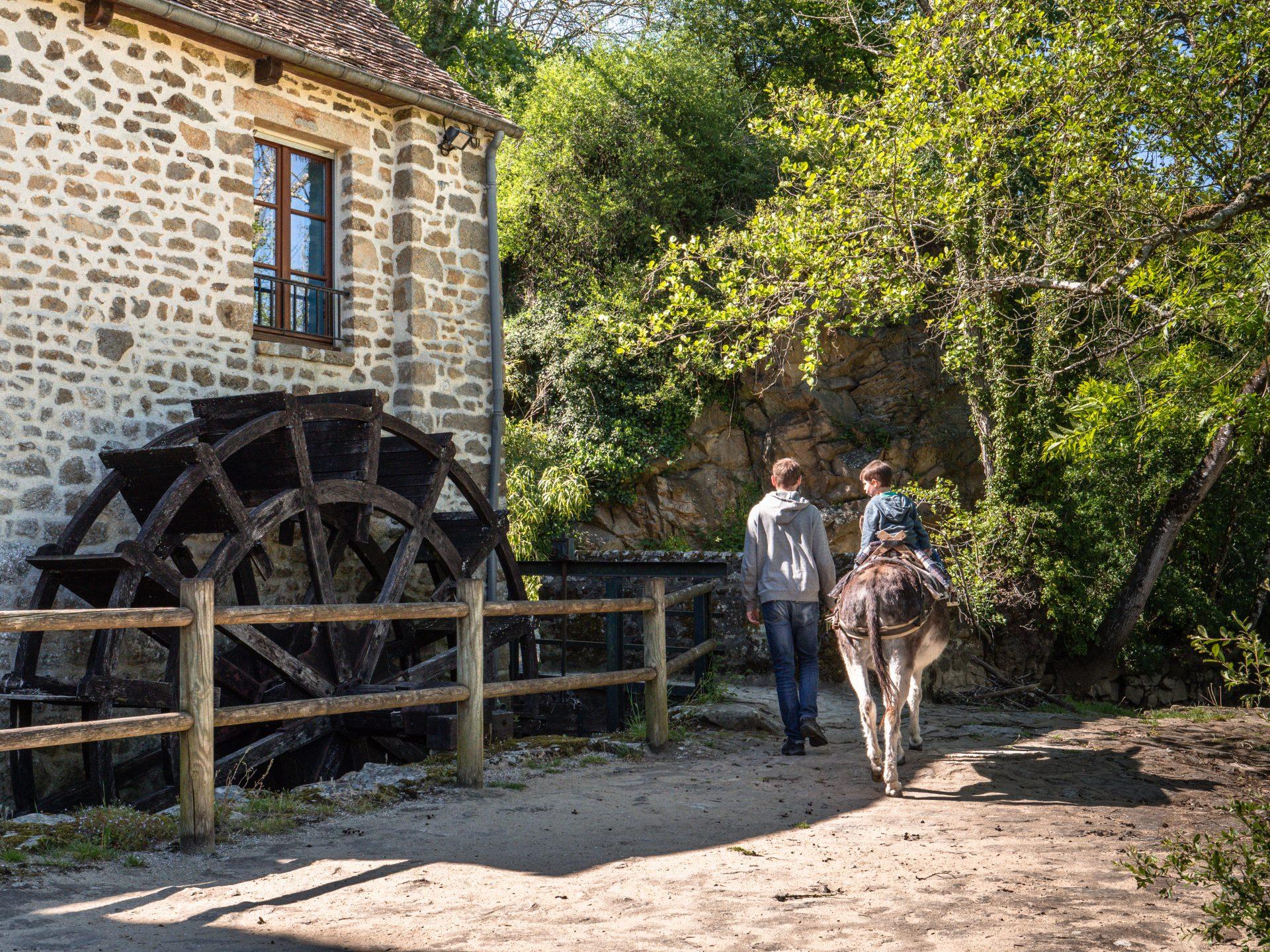 ane moulin 54496 - Les globe blogueurs - blog voyage nature
