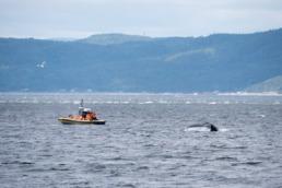 Observer les baleines en zodiac