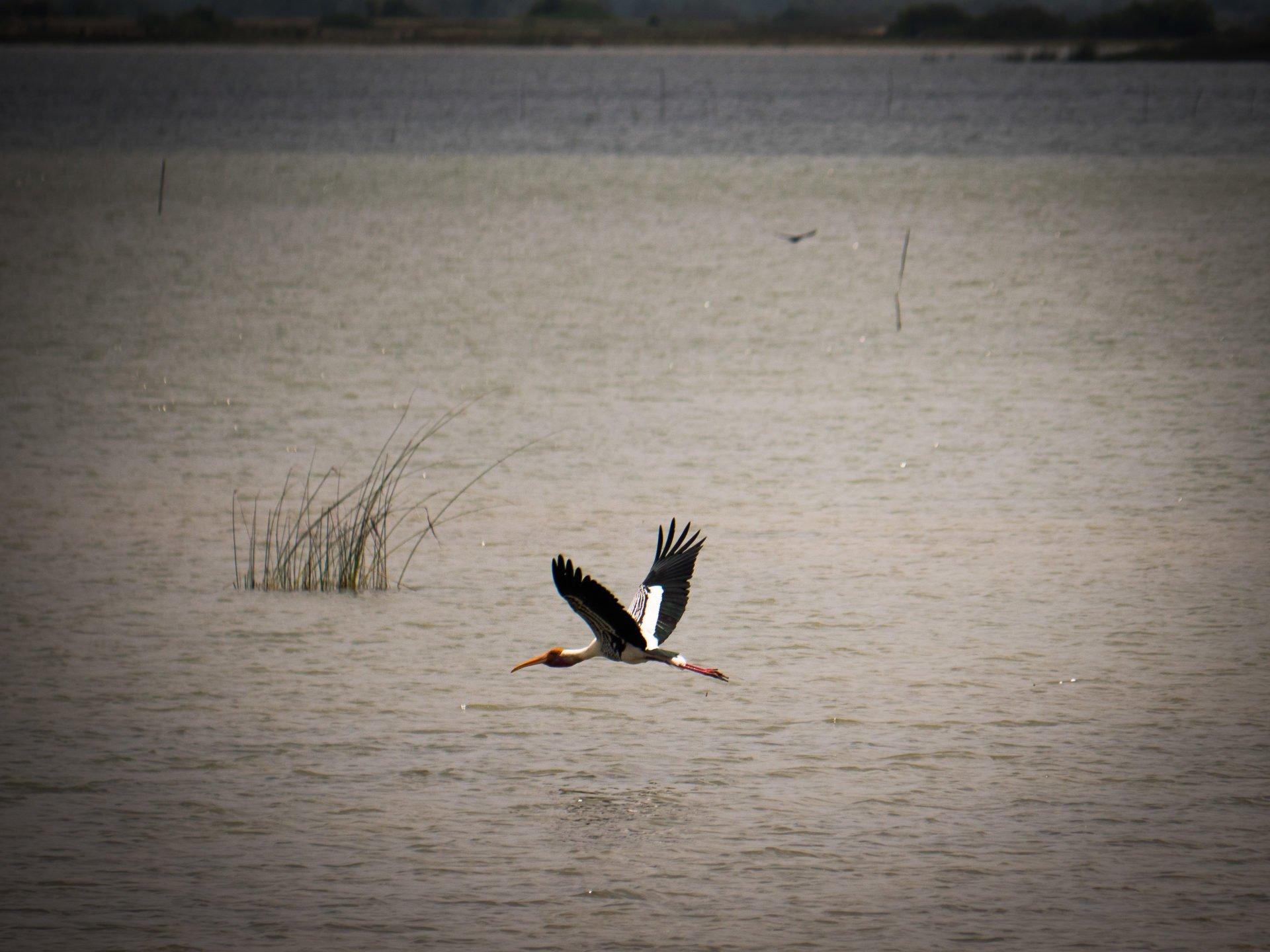 jaffna oiseau - Les globe blogueurs - blog voyage nature