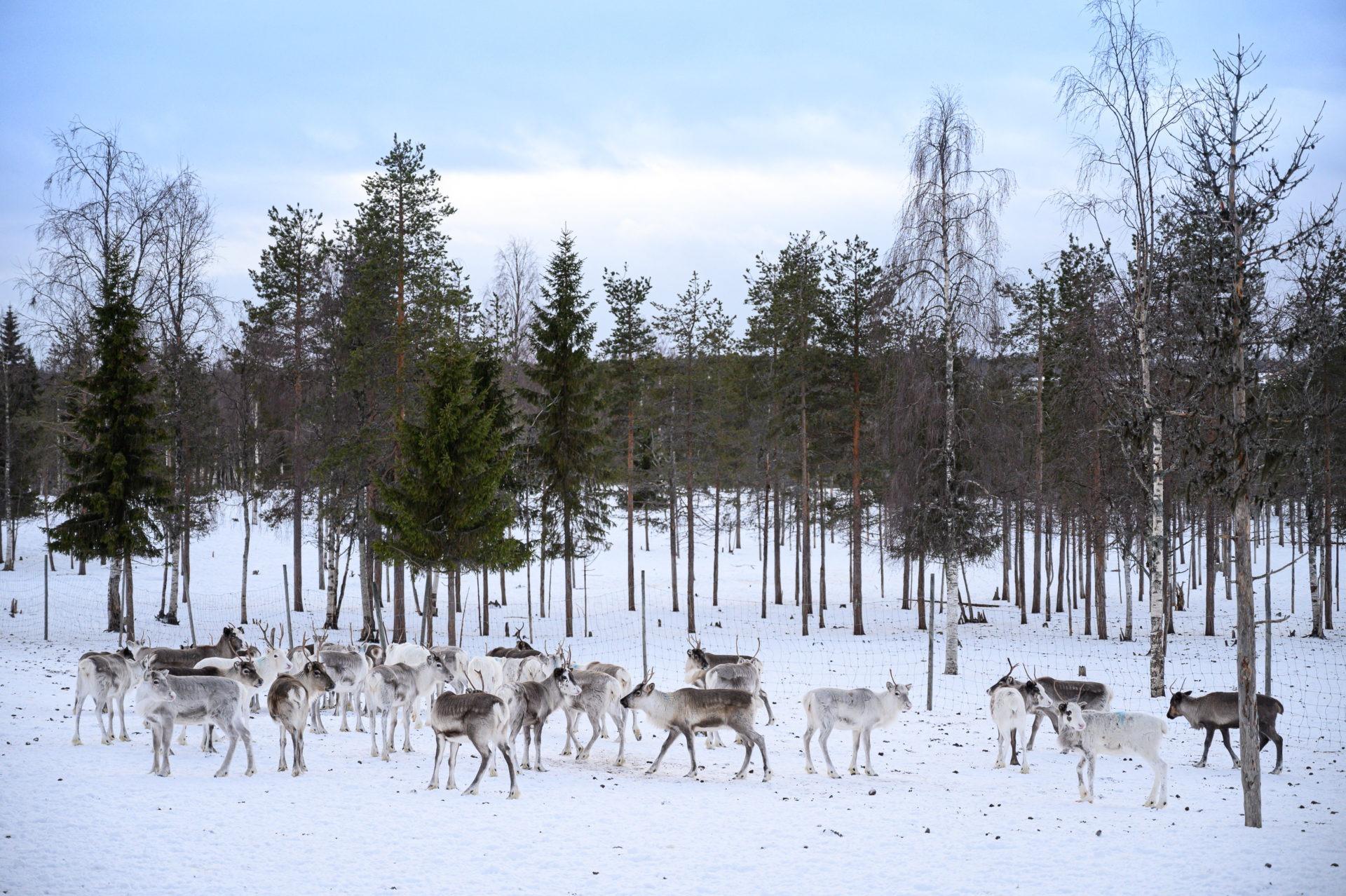 Laponie 2108