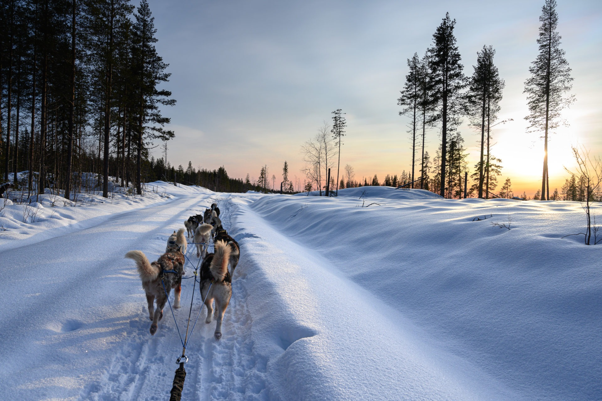 Laponie 2739
