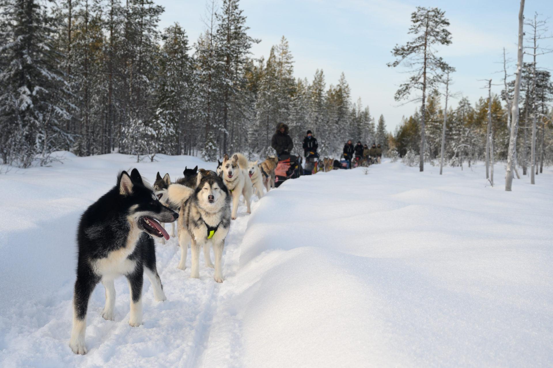 Laponie 2798