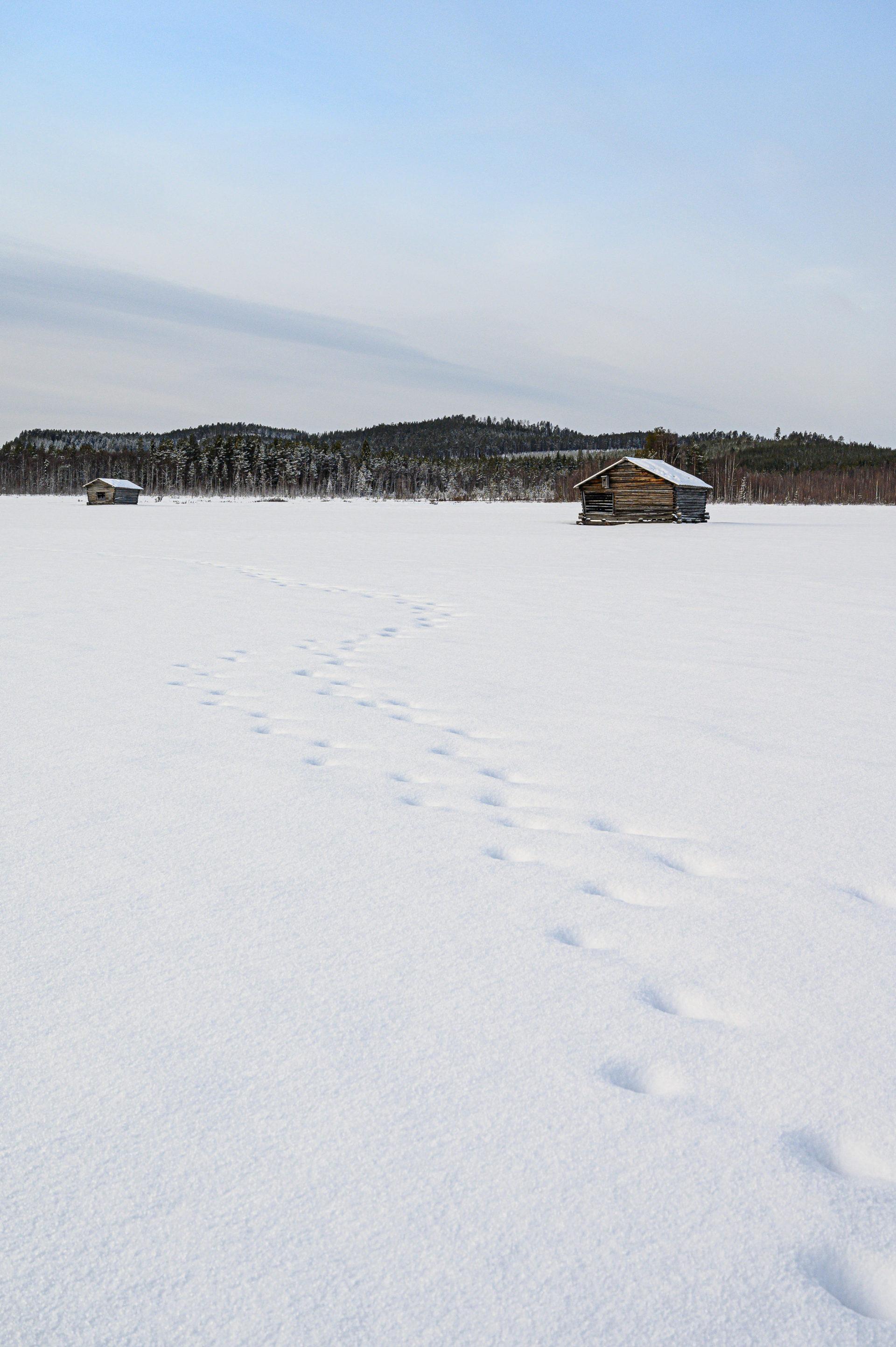 Laponie 2863