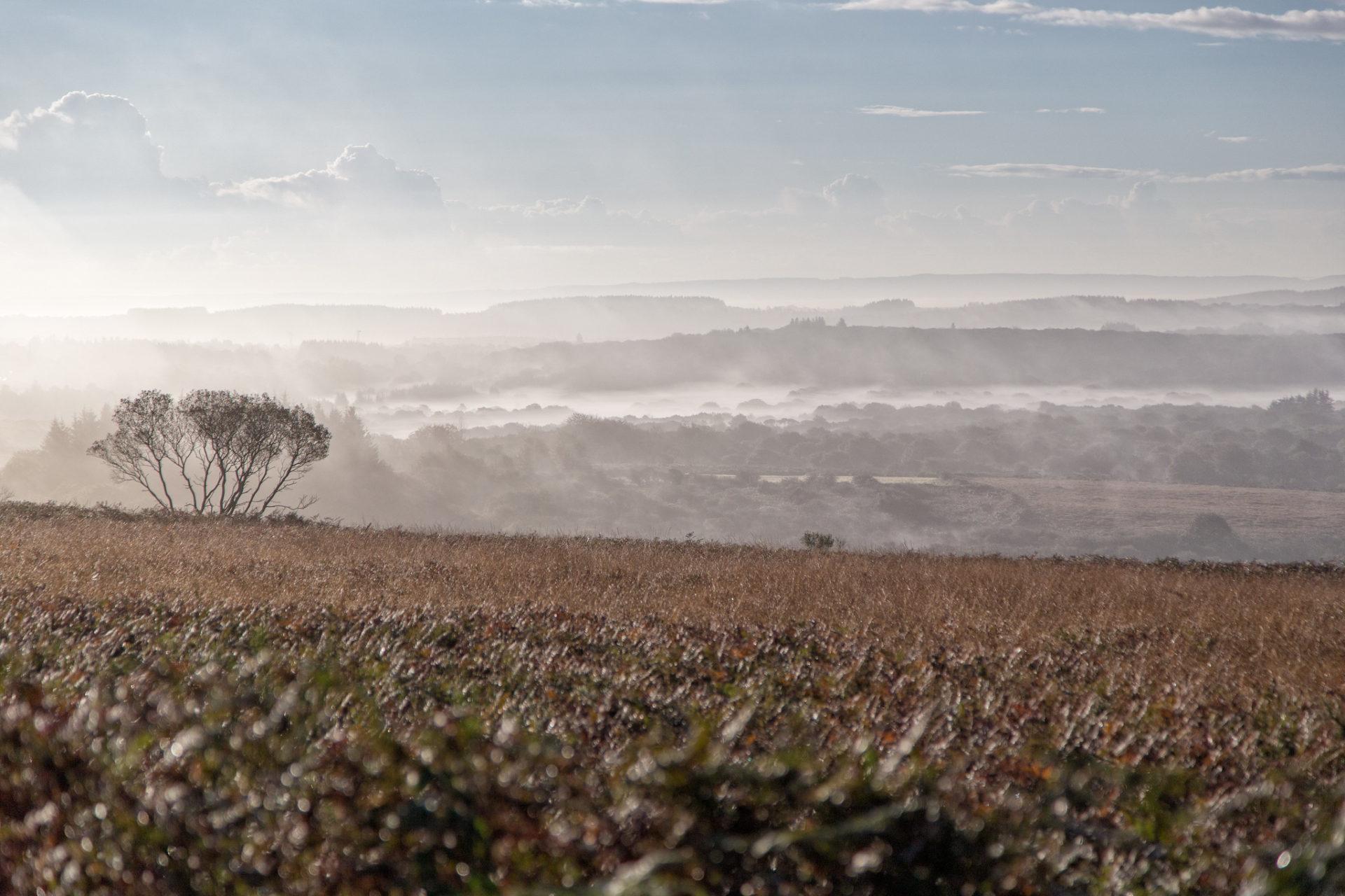 Les Monts d'Arrhée brume en Bretagne