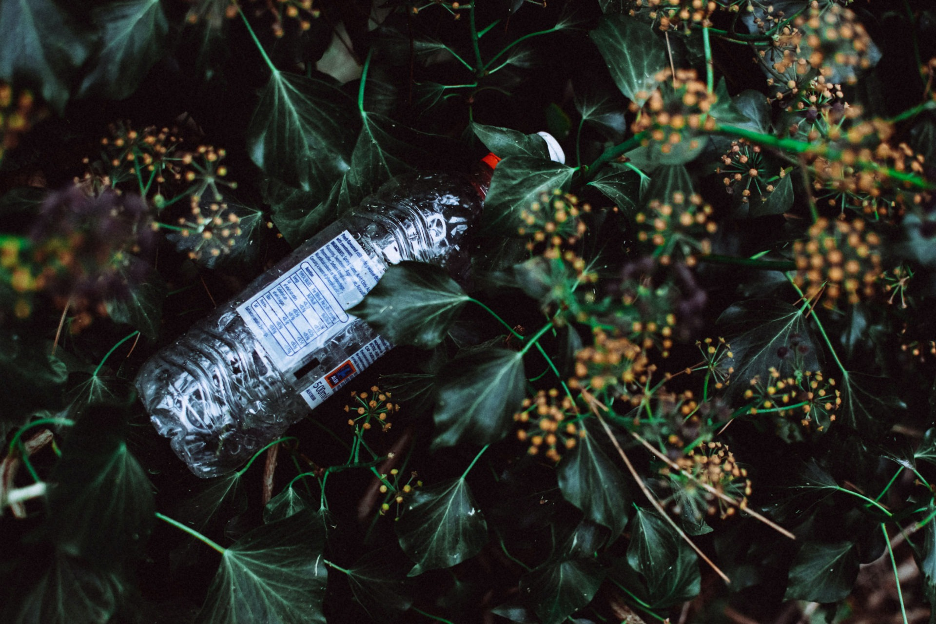 lisa fotios photo of water bottle on grass field 3264752 7 - Les globe blogueurs - blog voyage nature