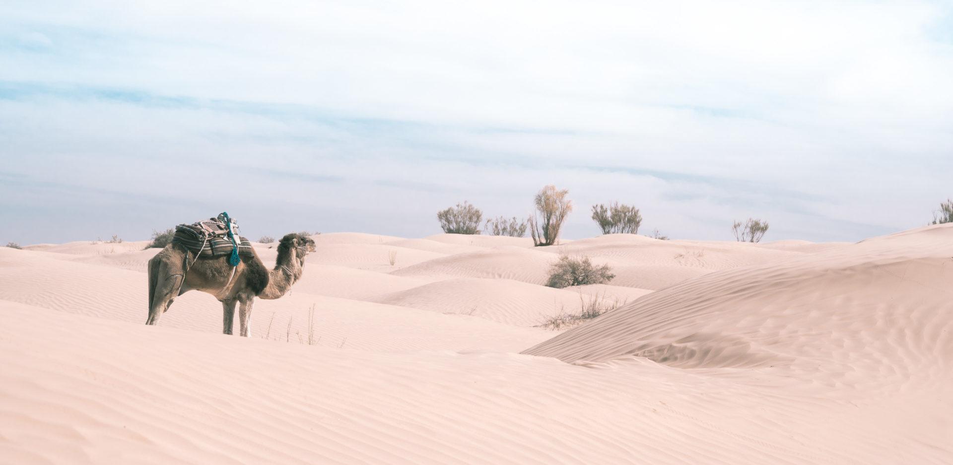 sahara tunisie rg 6075