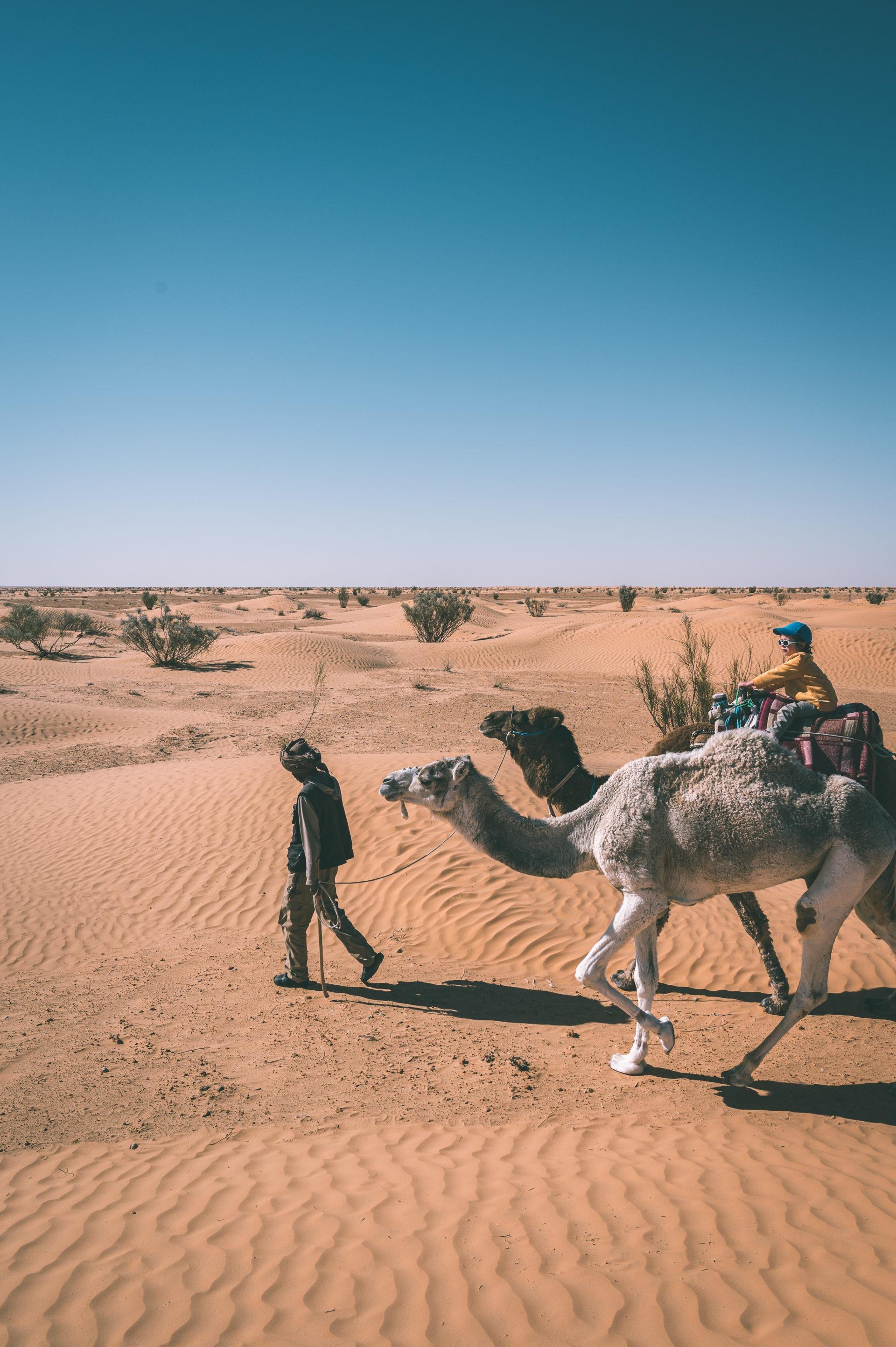 sahara tunisie dromadaire enfant